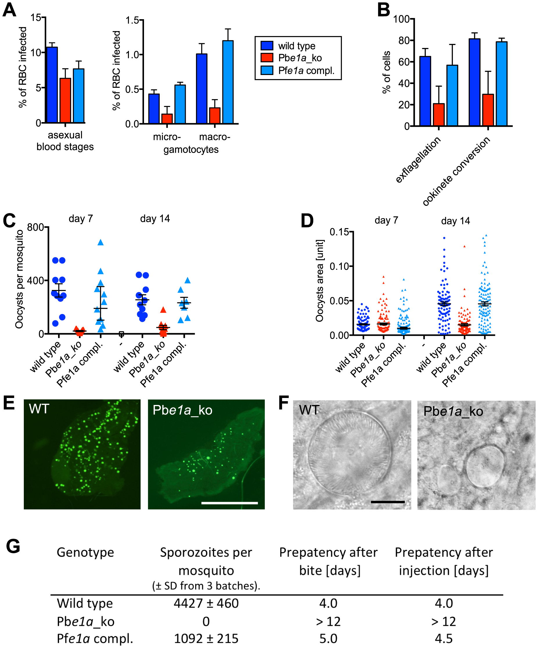 Role of BCKDH during sexual development and in mosquito stages of <i>P. berghei</i>.