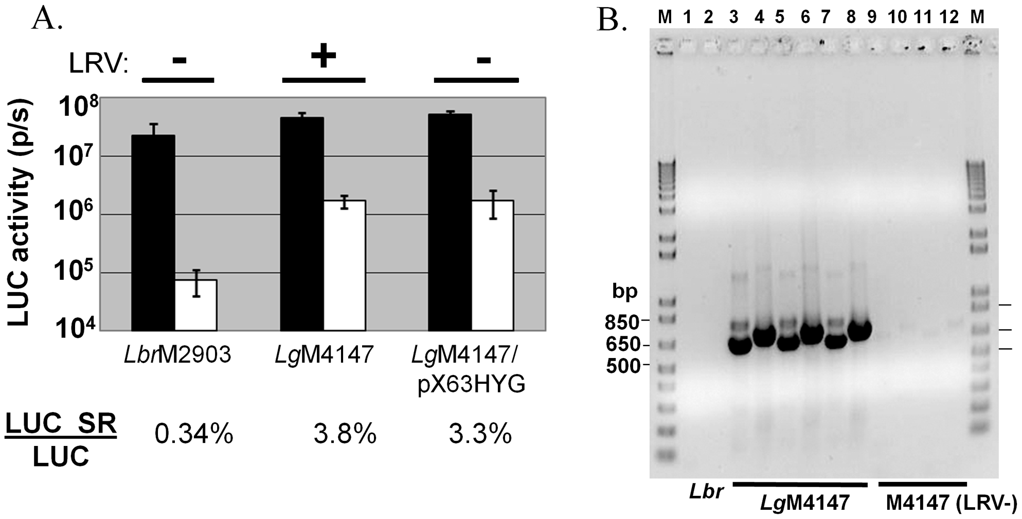 Efficiency of RNAi is reduced in <i>L. guyanensis</i> M4147 independent of LRV status.