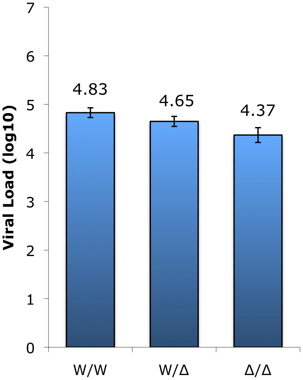 SIV plasma viral load measurements in infected sooty mangabeys between genotype groups.