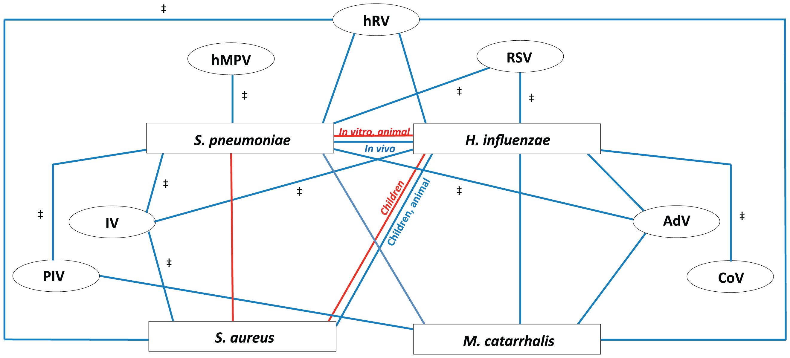 Proposed model of bacterial and viral interactions.