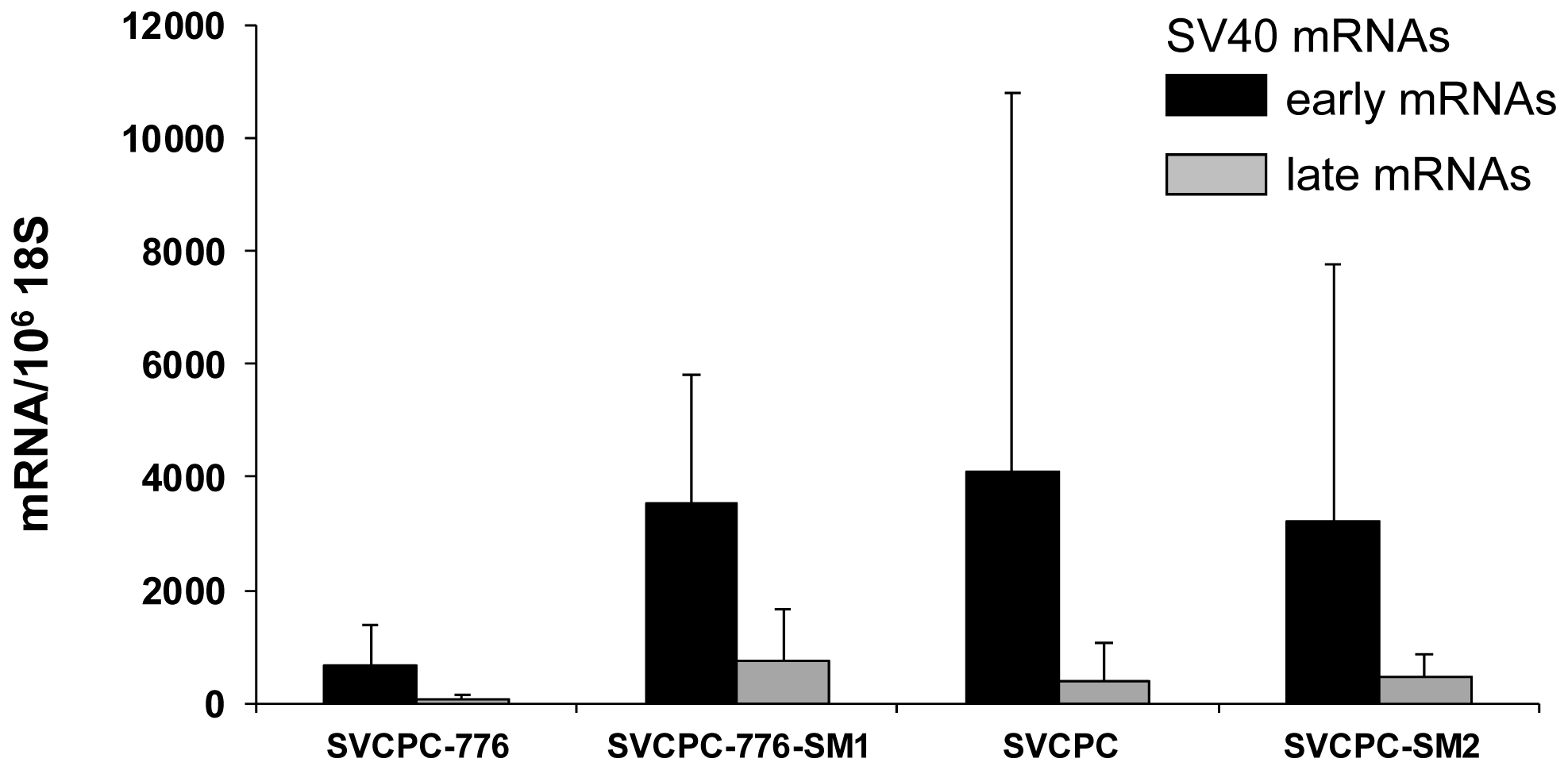 Detection of simian virus 40 (SV40) early and late mRNAs in hamster tumors induced by wild-type viruses and microRNA-negative mutants following intraperitoneal inoculation.