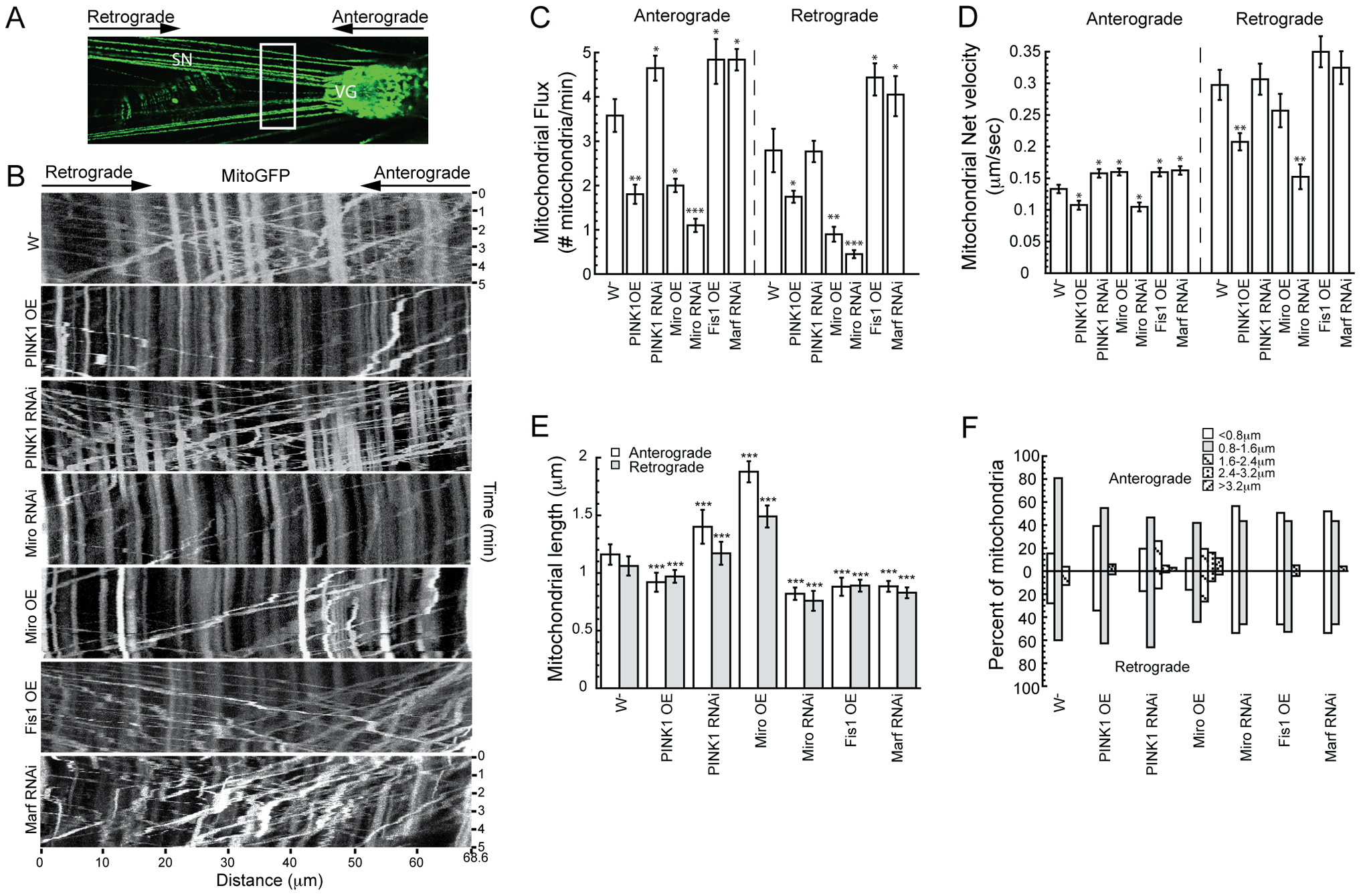 PINK1 regulates mitochondrial motility in <i>Drosophila</i> larval motor neurons.