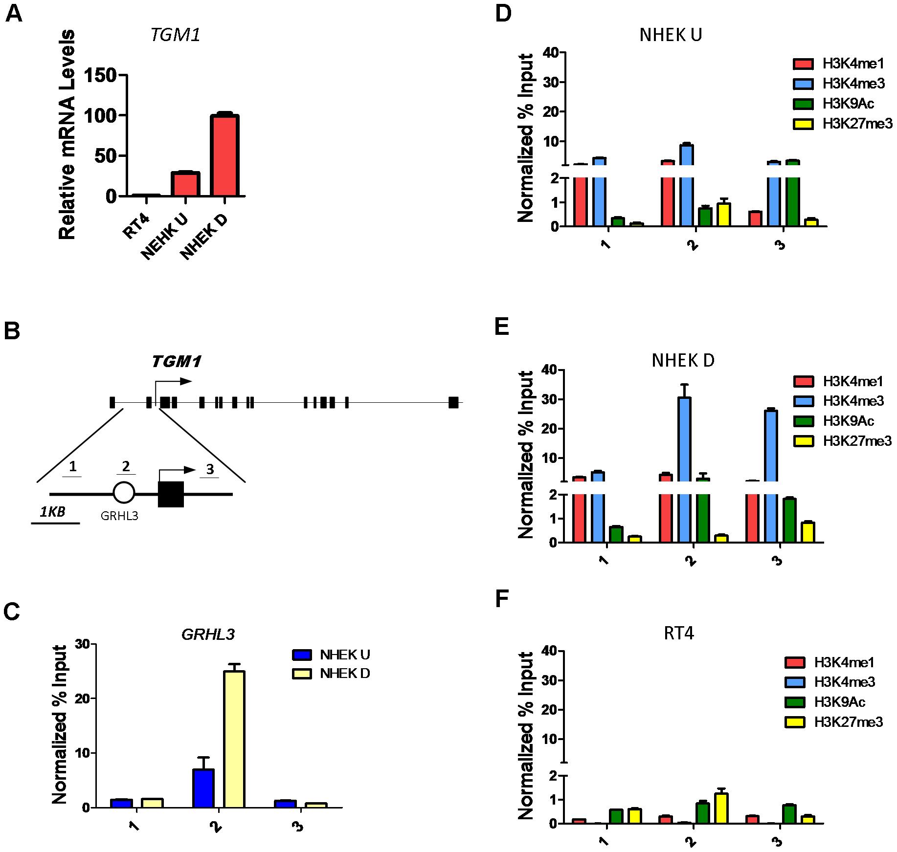 Histone landscape at the <i>TGM1</i> promoter.