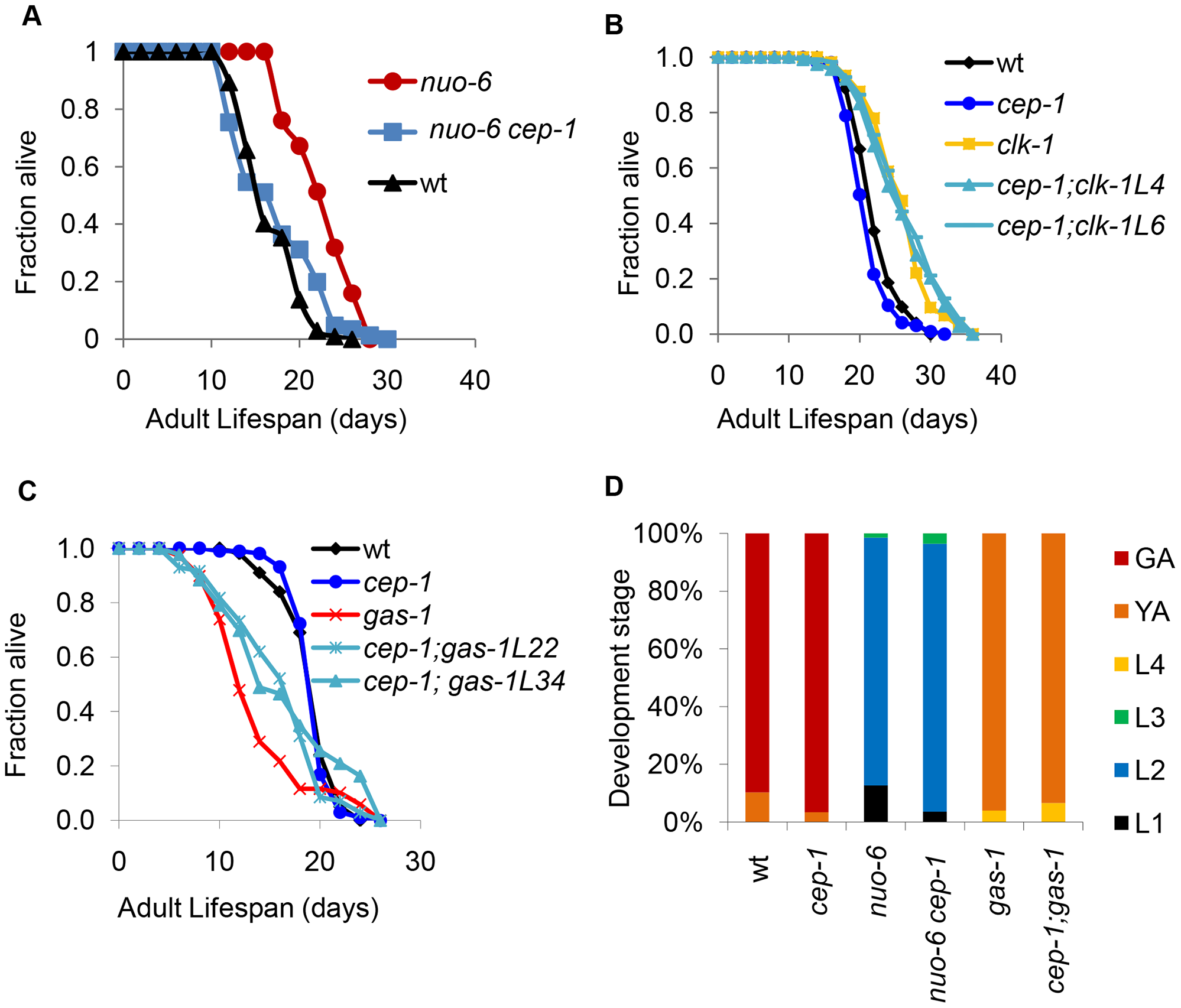 CEP-1 mediates the longevity and development of several mitochondrial mutants in <i>C. elegans</i>.