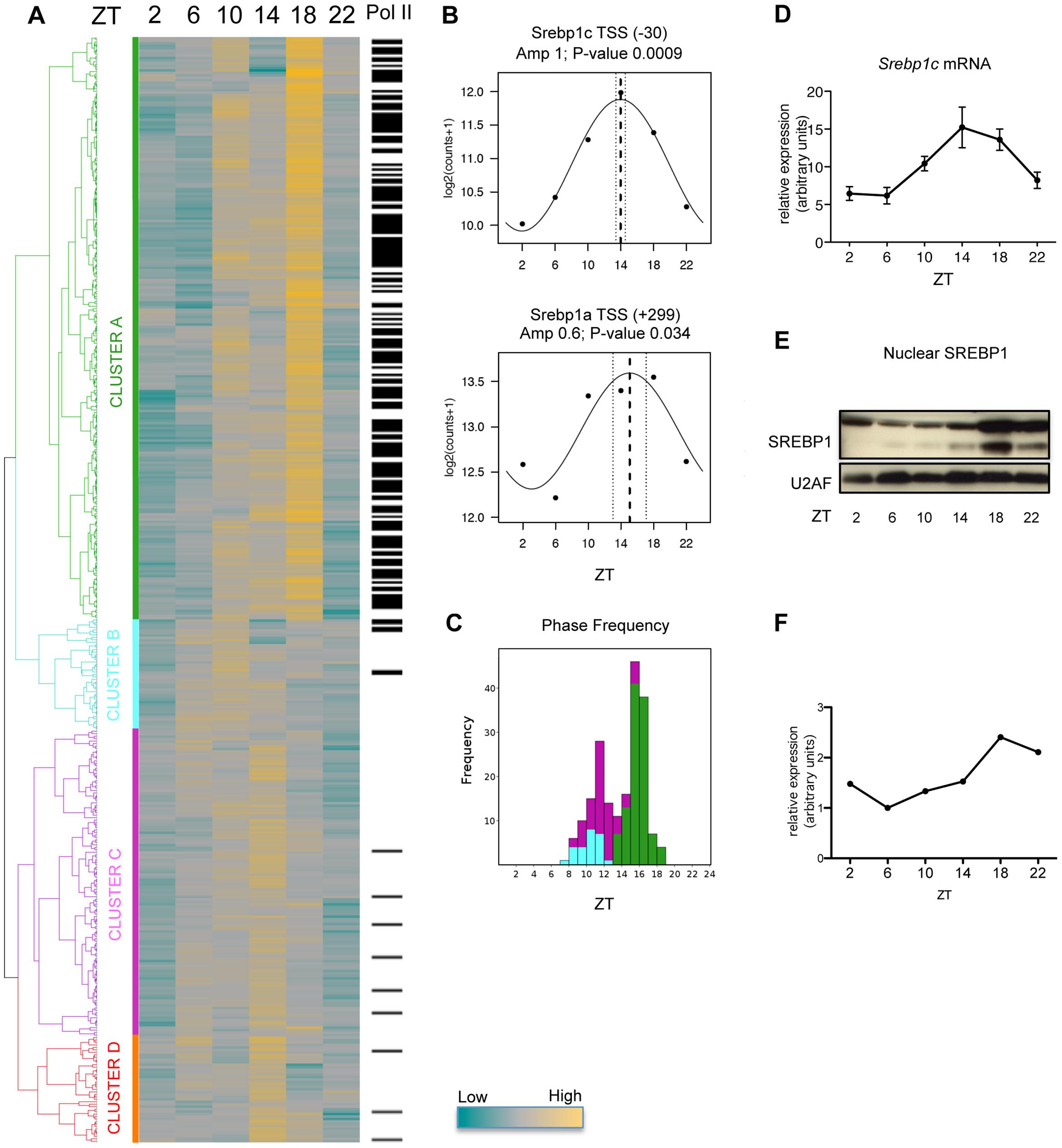 Dynamics of SREBP1 binding.