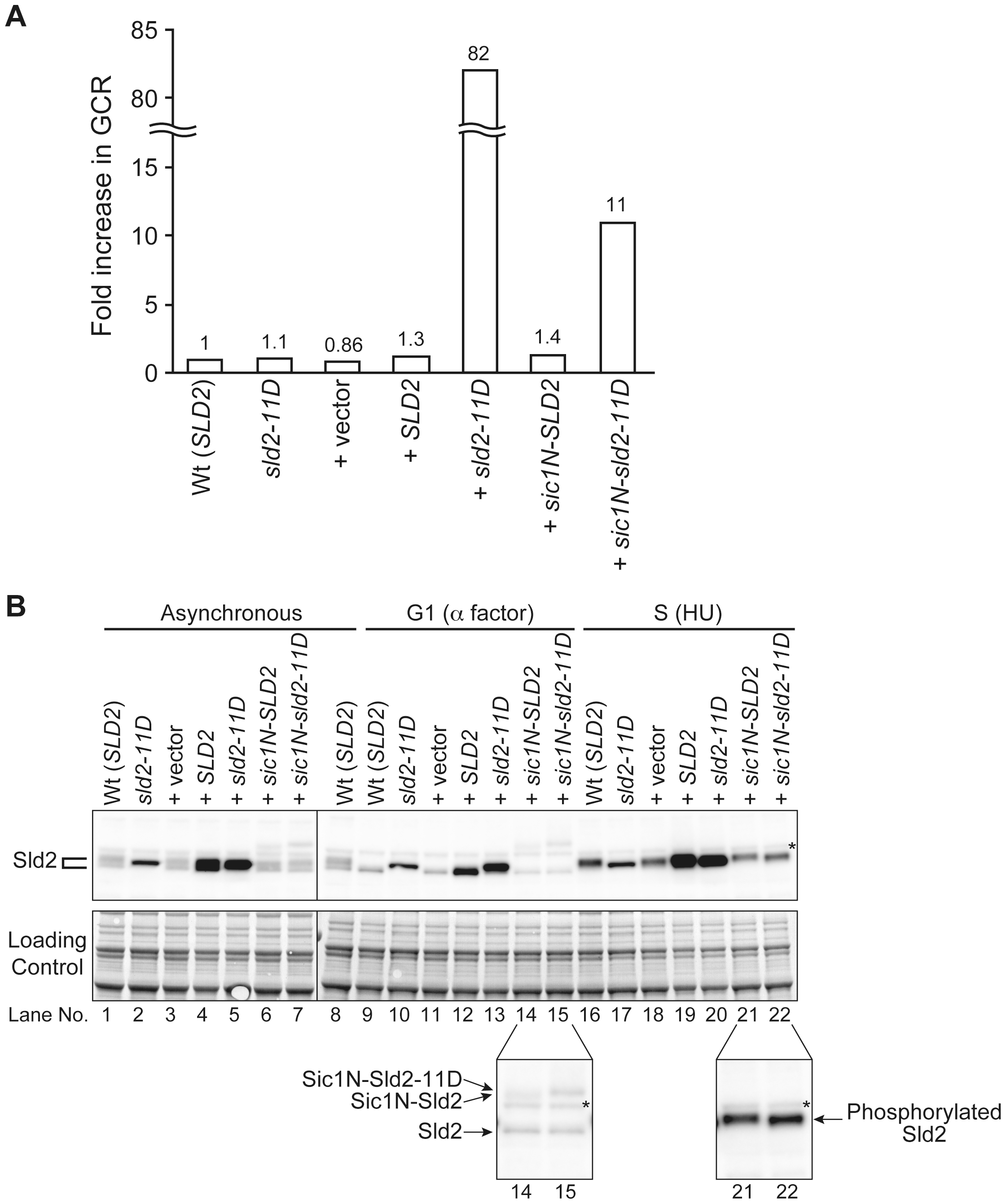 Extra Sld2-11D expression similar at endogenous level can induce GCR.