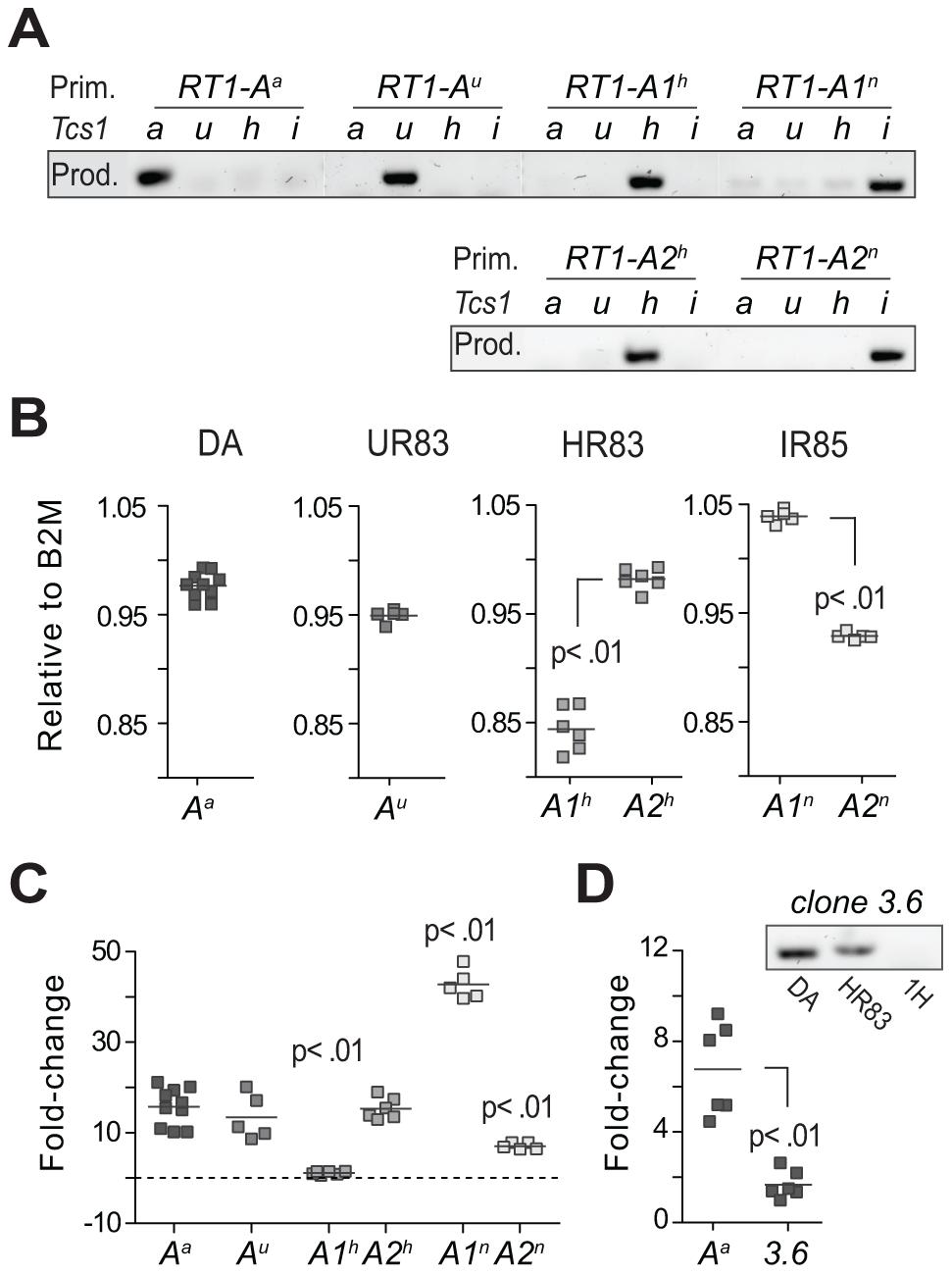 Transcriptional regulation of MHC class I genes.