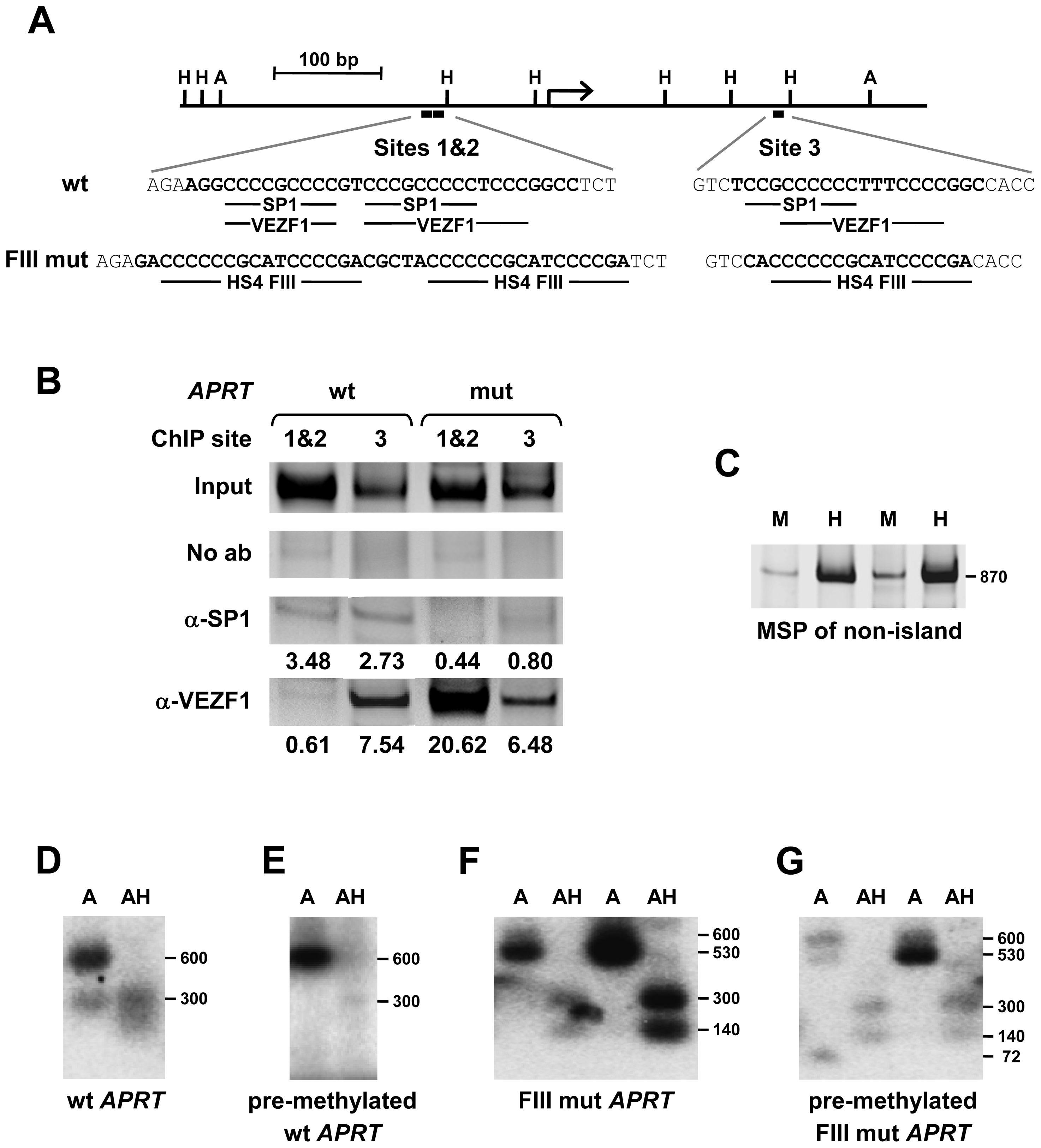 VEZF1 elements protect a CpG island from <i>de novo</i> DNA methylation.