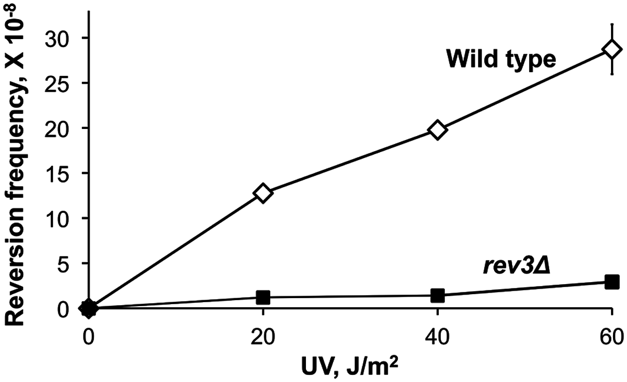 Frequency of UV-induced reversion of the <i>ura3-G764A</i> allele in the wild-type and Polζ-deficient (<i>rev3Δ</i>) strains.