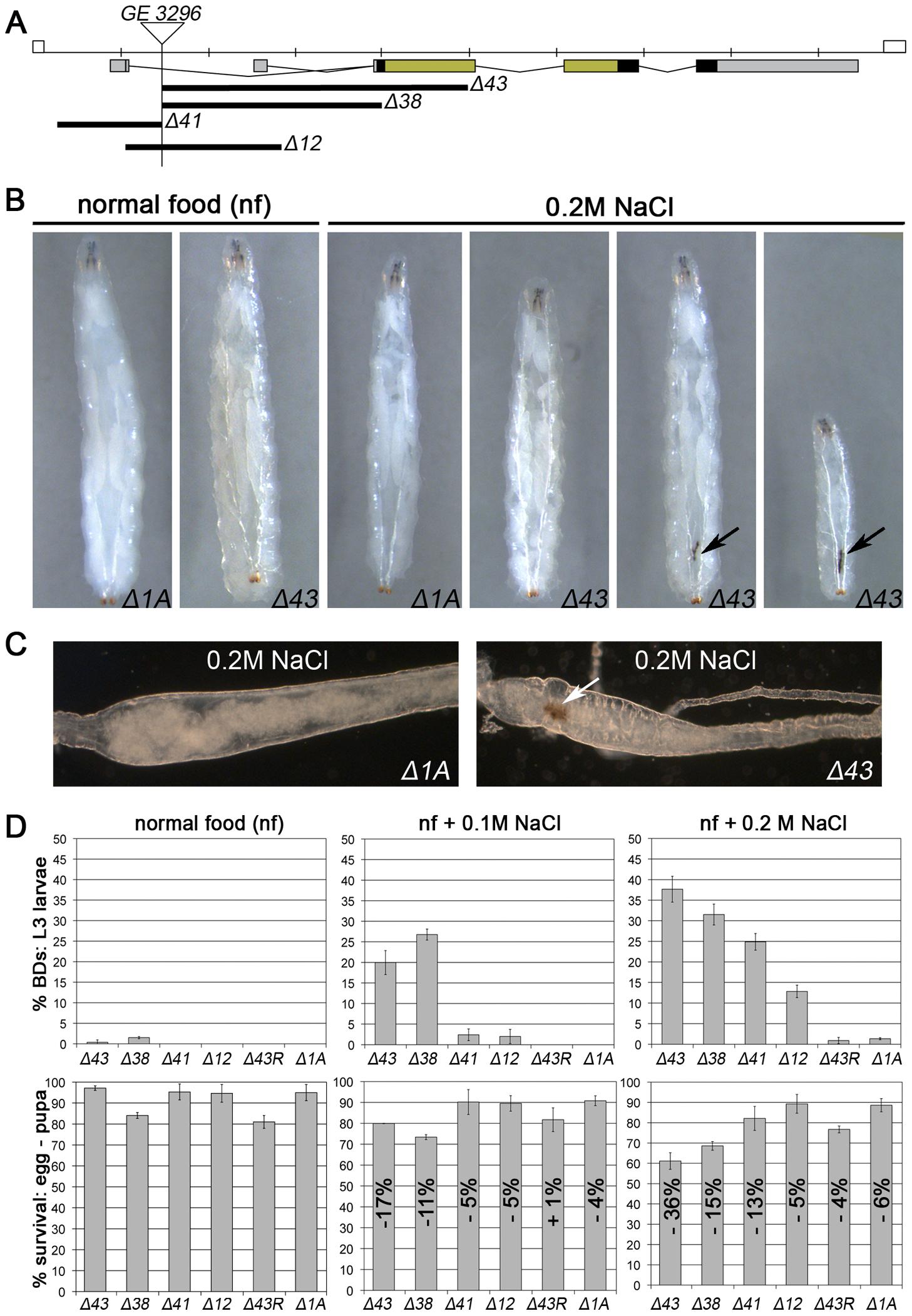 <i>MK2</i> deficient larvae are sensitive to salt stress.