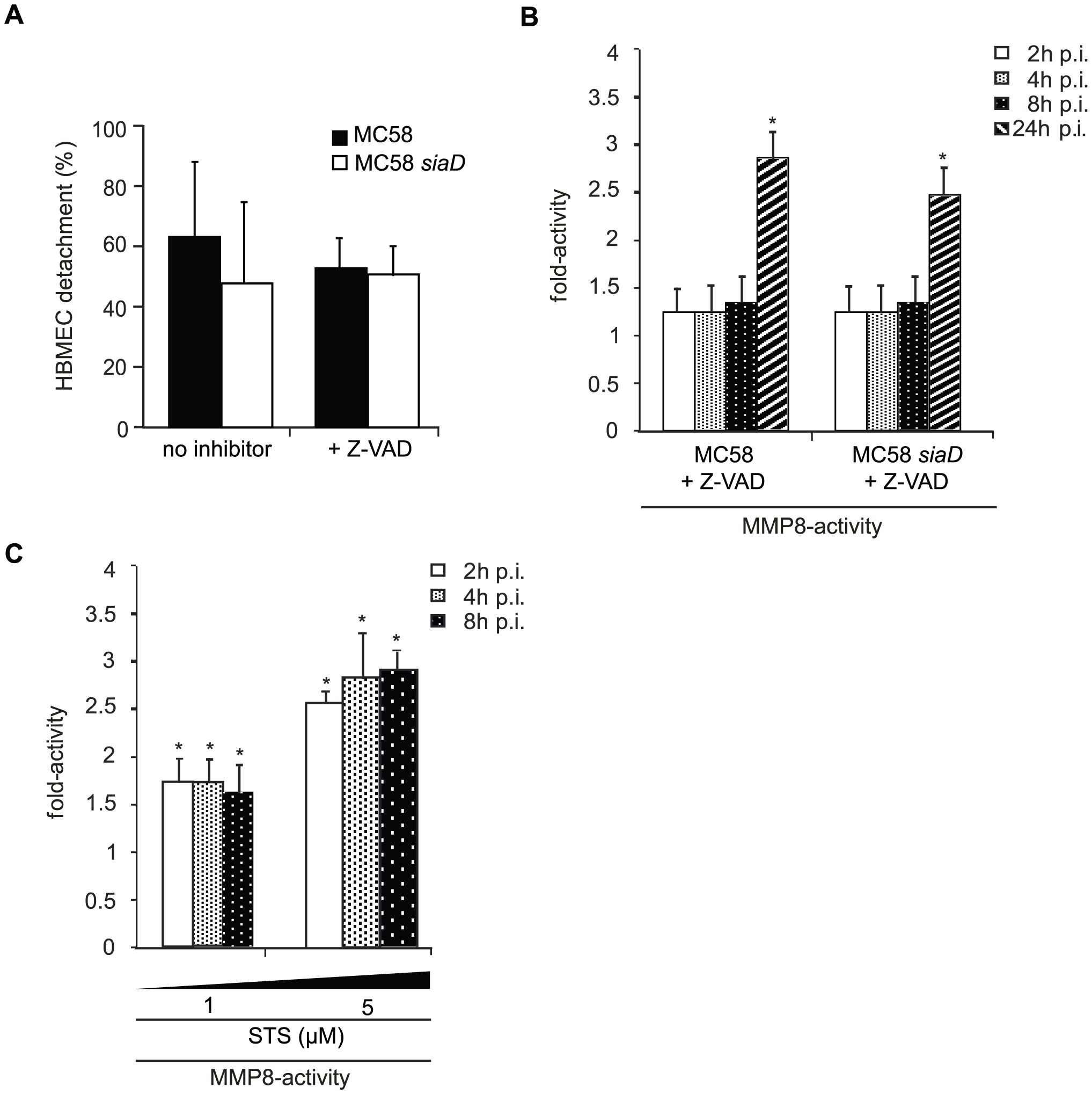 <i>N. meningitidis</i> infection triggers caspase-independent detachment of HBMEC.