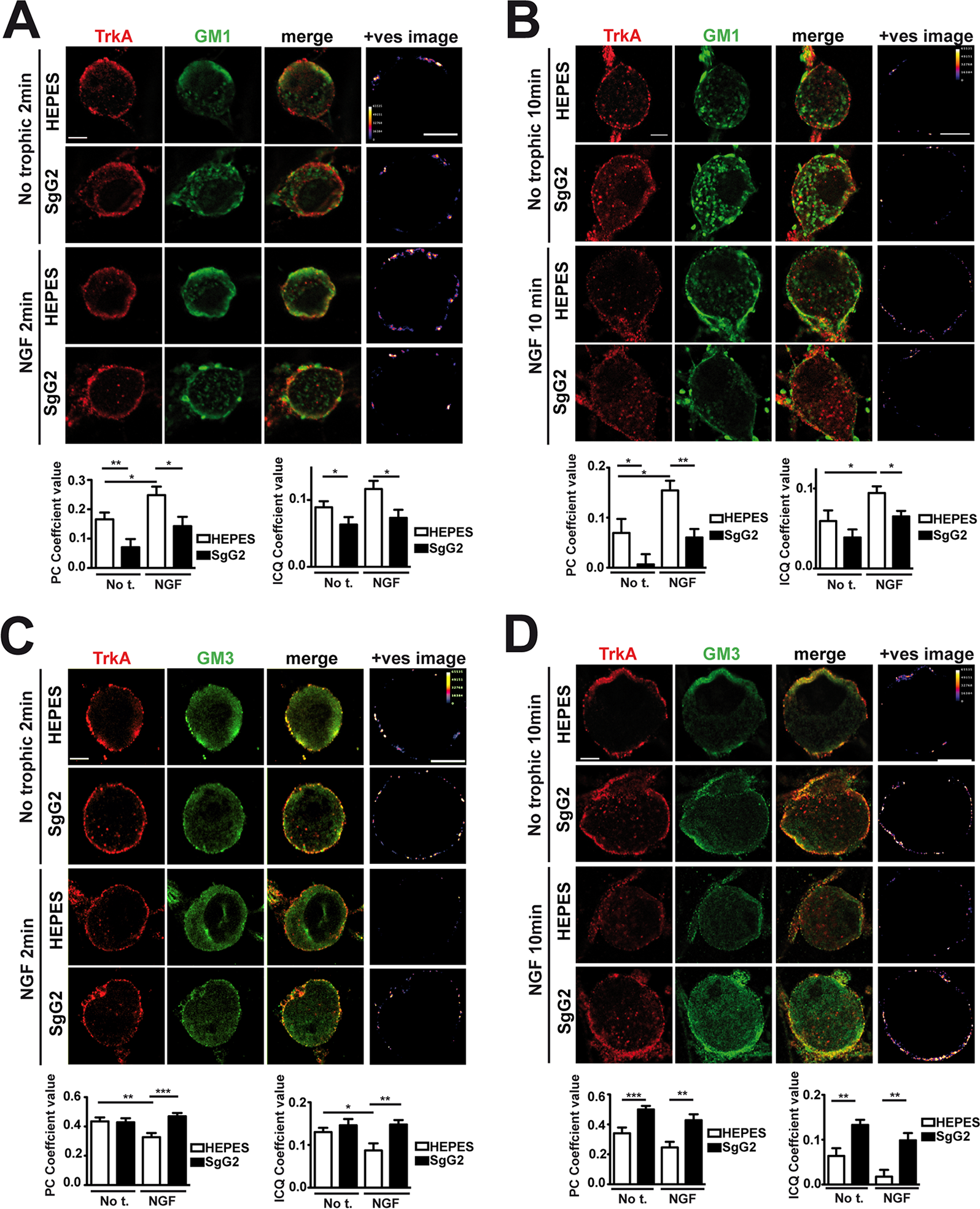 SgG2 promotes the incorporation of TrkA into different microdomains of the plasma membrane.