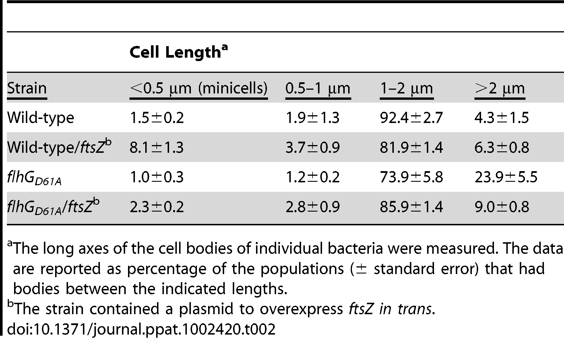 Analysis of the effects of FtsZ overexpression on minicell and elongated cell phenotypes of wild-type <i>C. jejuni</i> and <i>C. jejuni flhG D61A</i>.