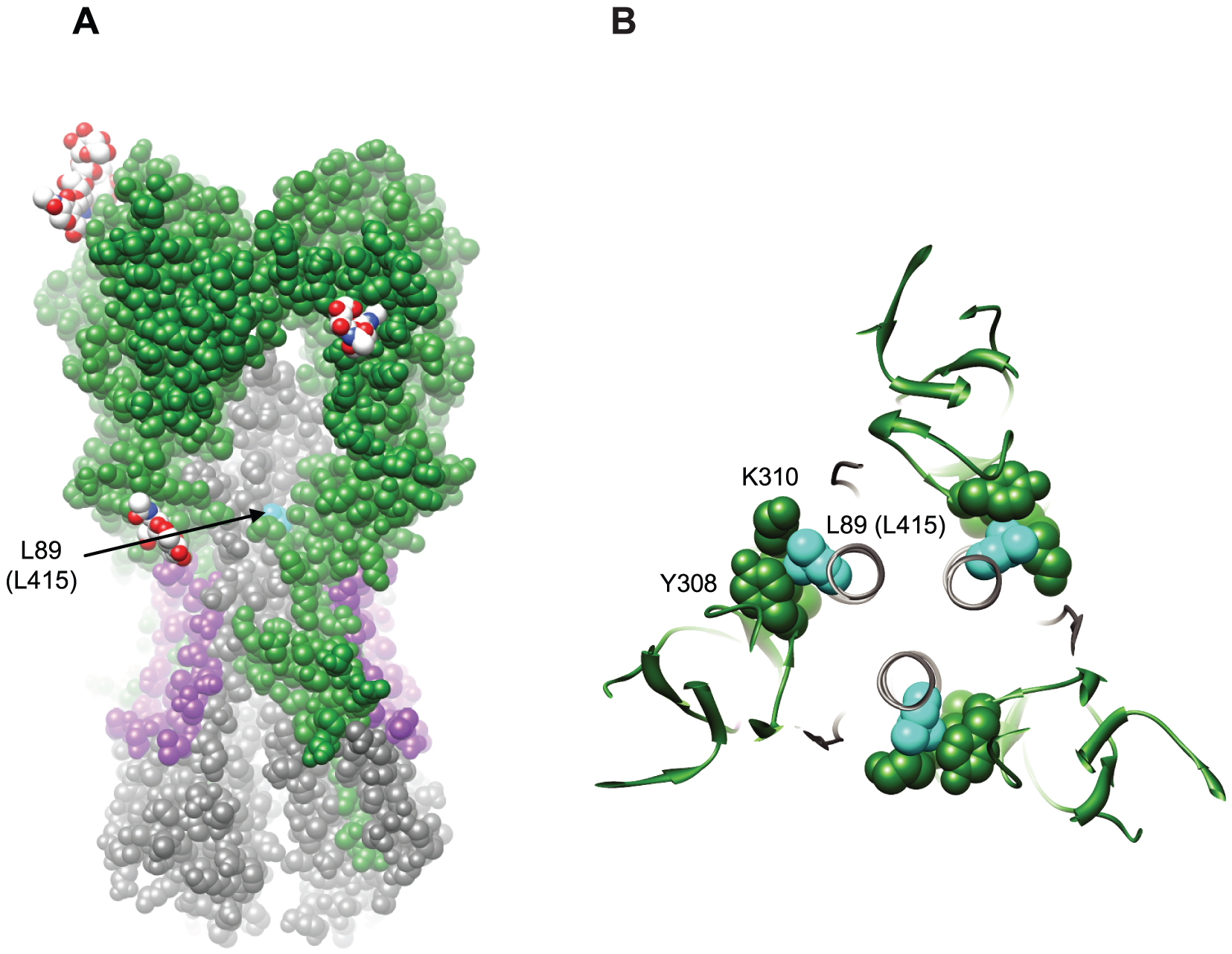 Structural implications for the L89I (L415I) mutation in HA2.