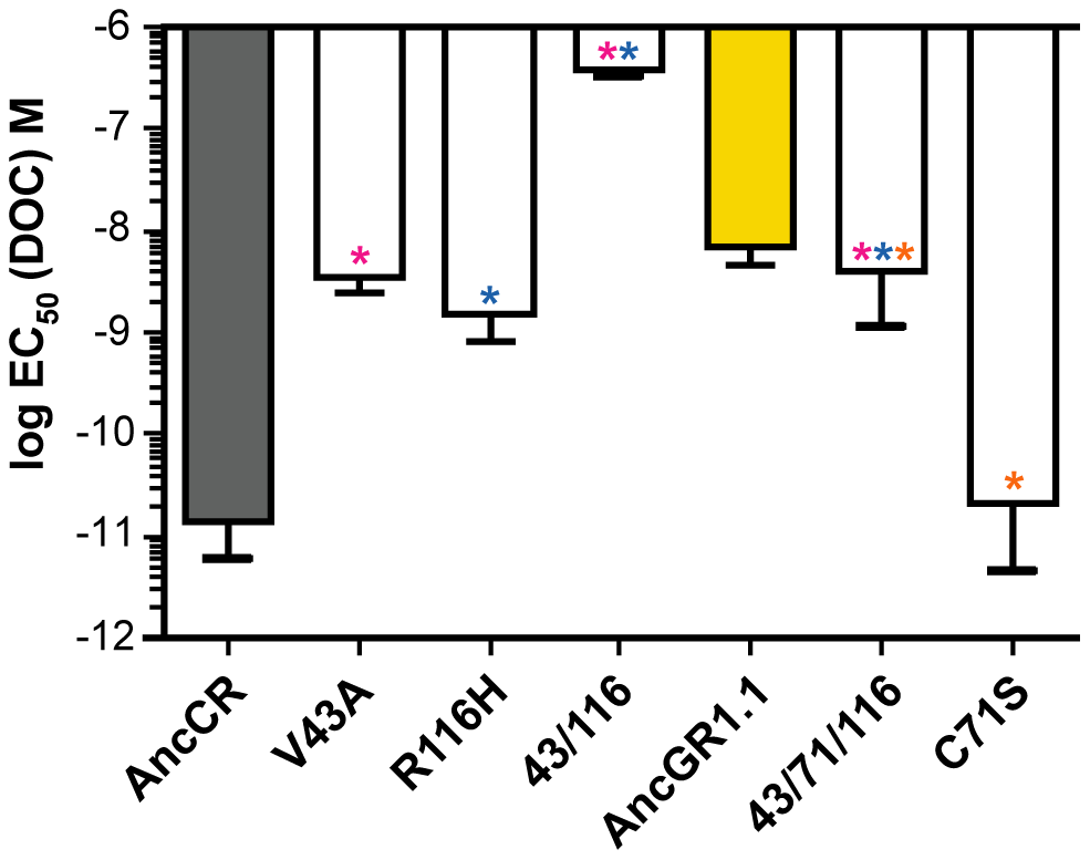 Three historical substitutions in AncCR recapitulate the evolution of reduced sensitivity.