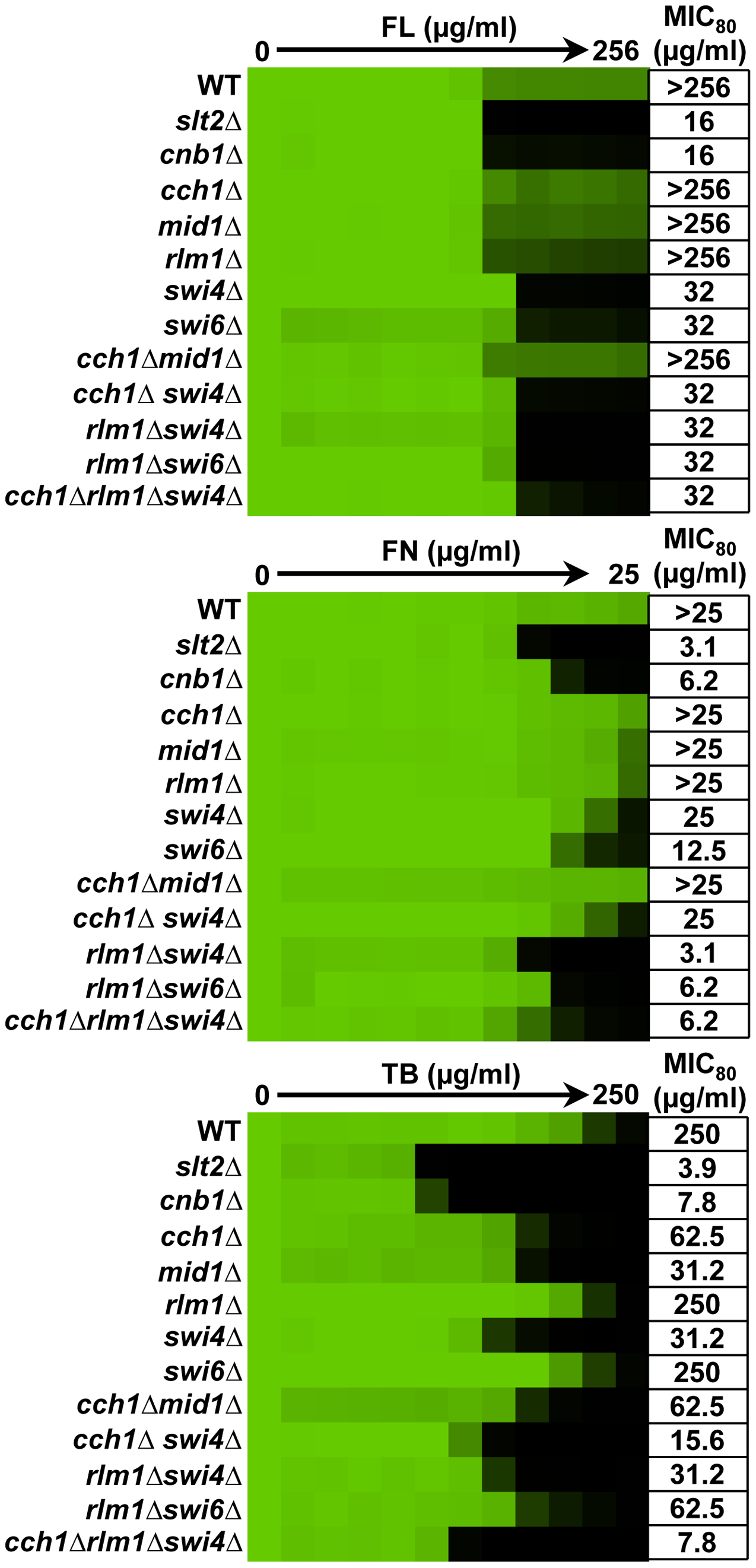 Distinct downstream effectors are important for tolerance of <i>S. cerevisiae</i> to different ergosterol biosynthesis inhibitors.