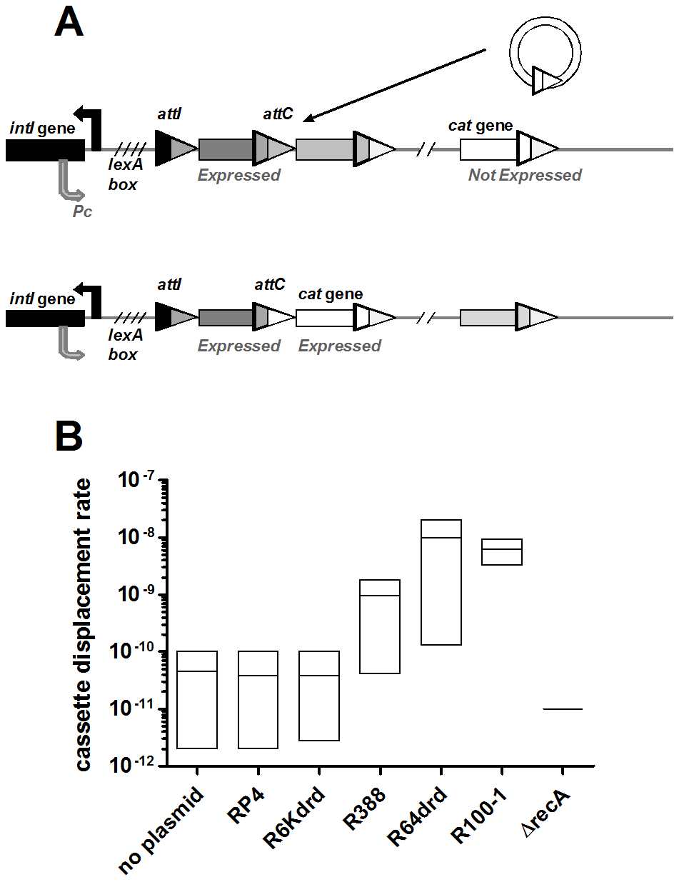 Conjugation triggers IntIA-dependent cassette recombination in <i>V.cholerae</i> superintegron.