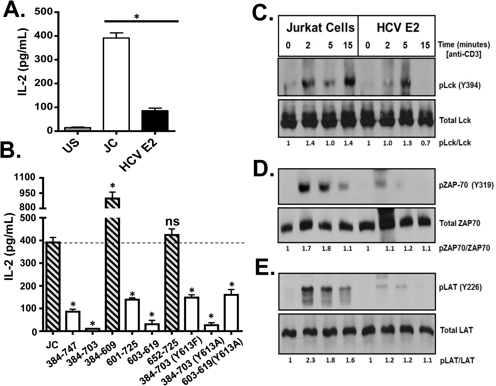 HCV envelope protein E2 inhibits T cell receptor (TCR)-mediated signaling.