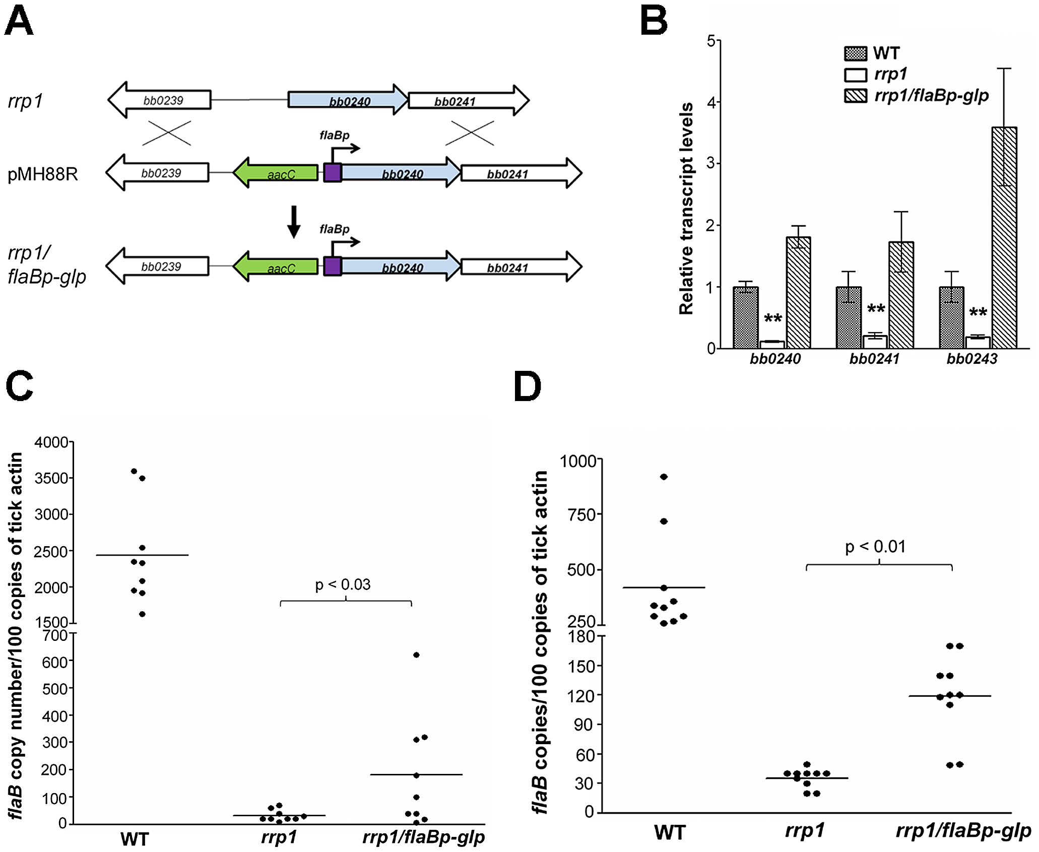 Constitutive expression of glycerol metabolism genes in the <i>rrp1</i> mutant partially restored spirochetal survival in ticks.