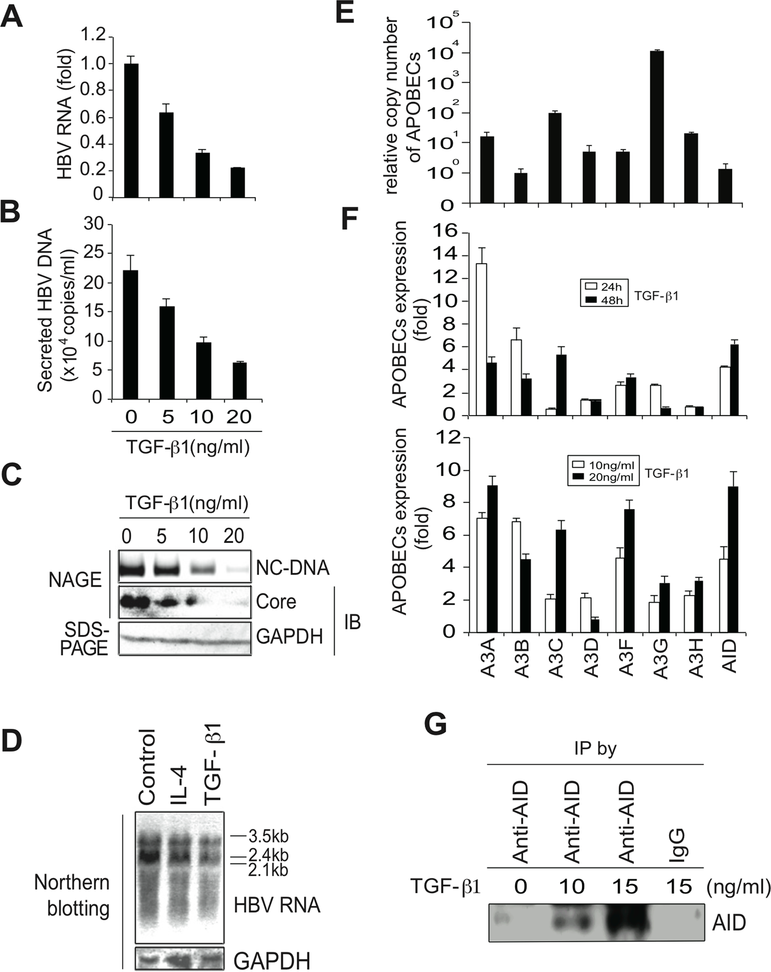 TGF-β1 upregulates APOBEC3 expression and suppresses HBV replication in Huh7 cells.
