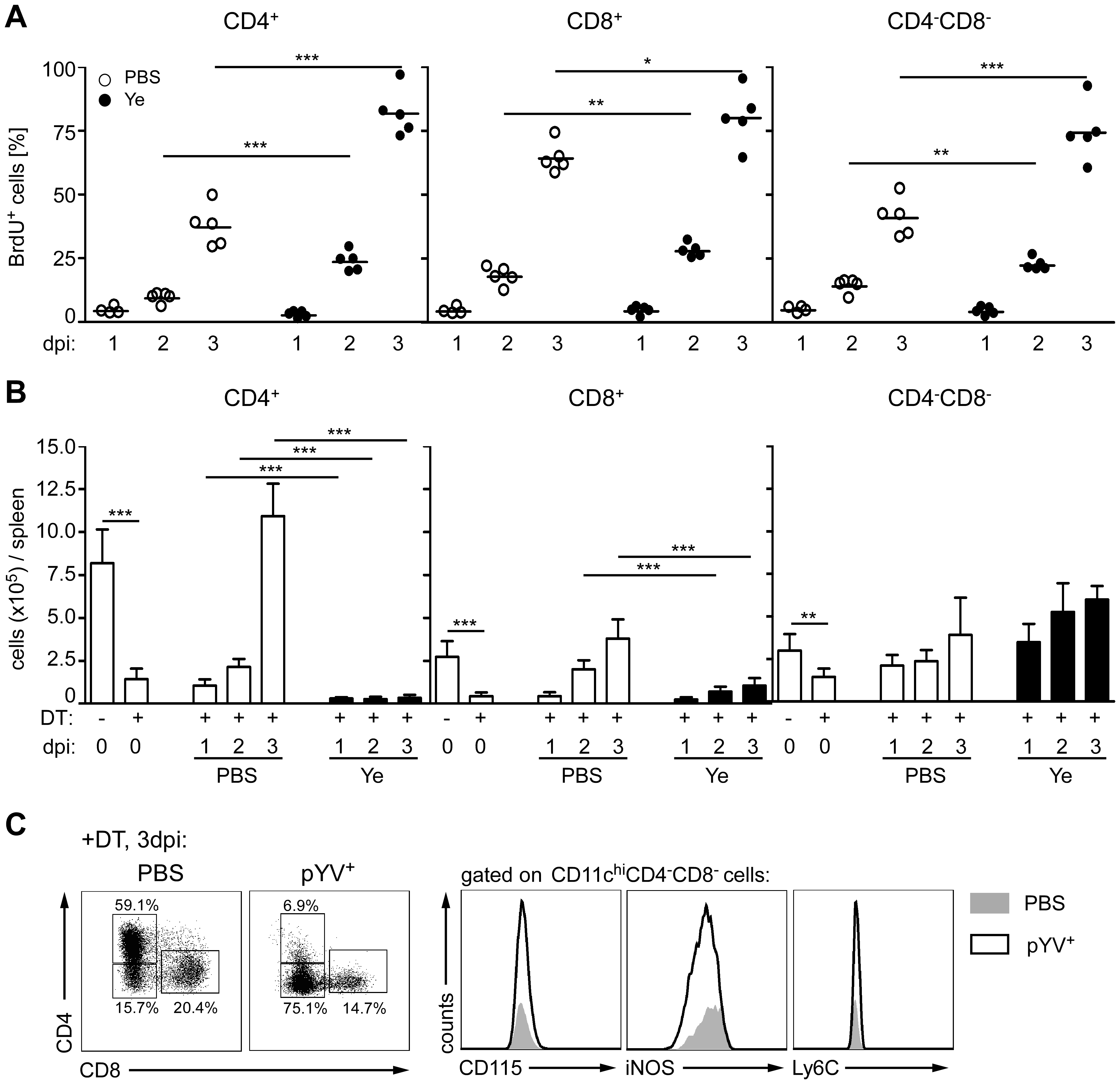 Proliferation and recovery of DC subpopulations from mice infected with Ye.