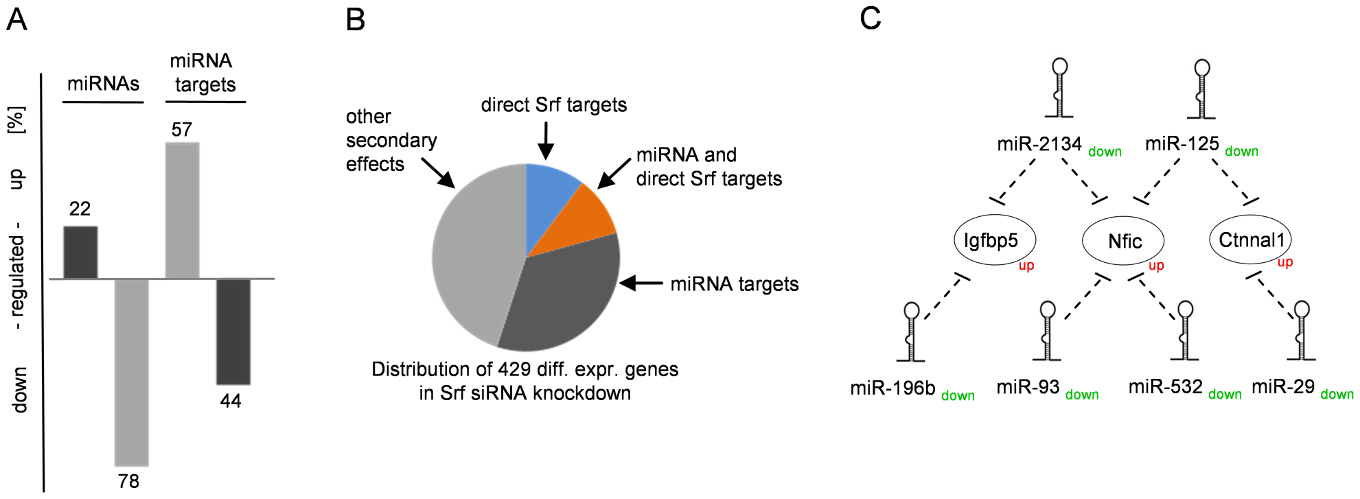 miRNAs and their impact on the Srf-driven transcription network.