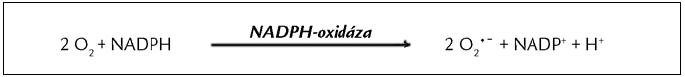 Reakce katalyzovaná NADPH-oxidázou [35]. NADPH-oxidáza katalyzuje vznik superoxidu (O<sub>2</sub> <sup>•</sup>¯) jednoelektronovou redukcí kyslíku.