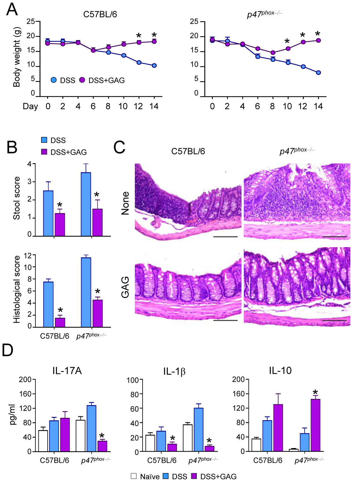 GAG protects mice from experimental DSS-induced colitis.