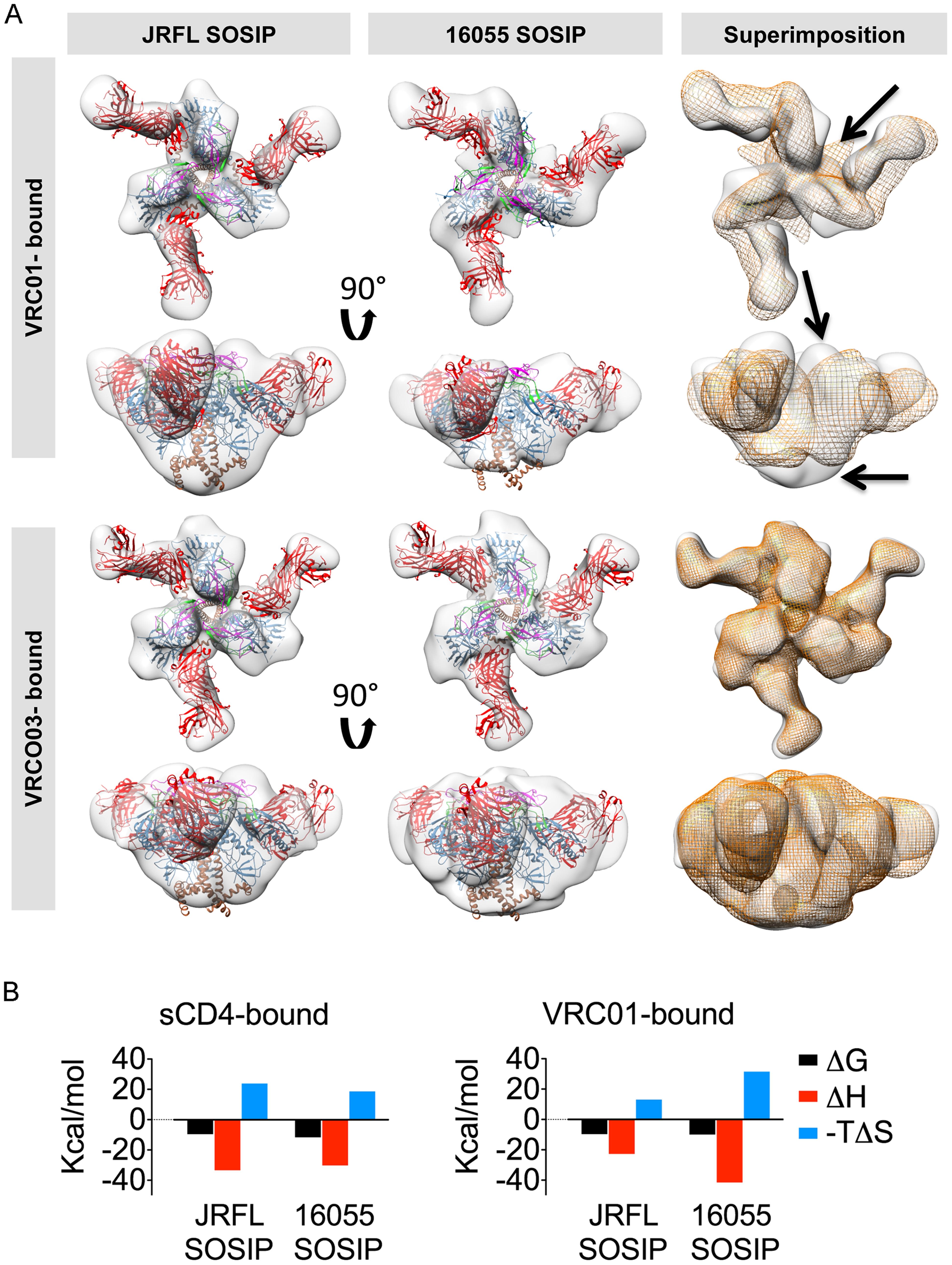 EM 3D reconstructions of VRC01- and VRC03-liganded SOSIP trimers.