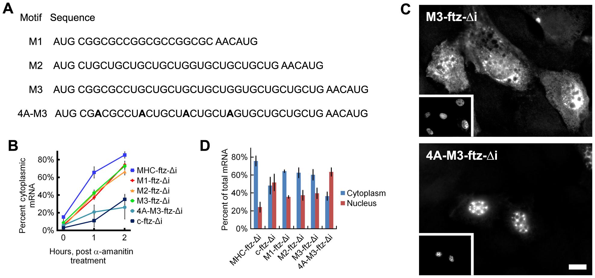 ALREX–associated motifs promote nuclear export of mRNA.