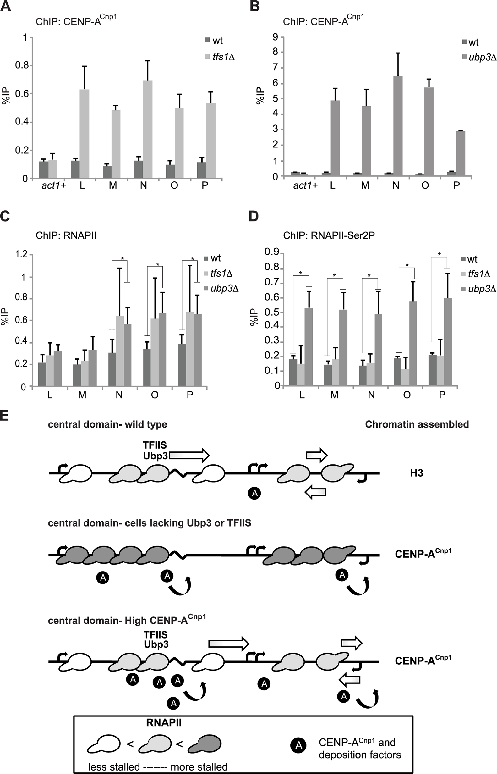 Mutants that affect RNAPII elongation allow <i>de novo</i> establishment of CENP-A<sup>Cnp1</sup> chromatin.