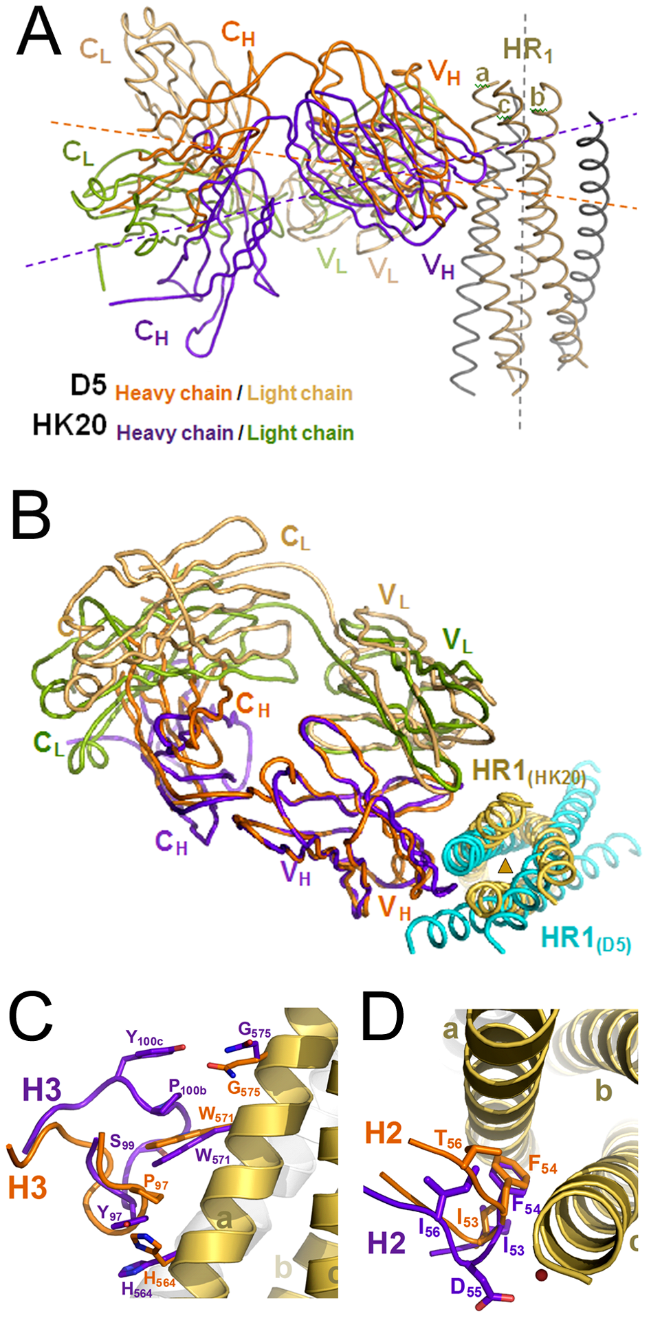 Cα super positioning of the HK20-5-Helix and the D5-5-Helix complexes reveals differences in epitope approach angles.