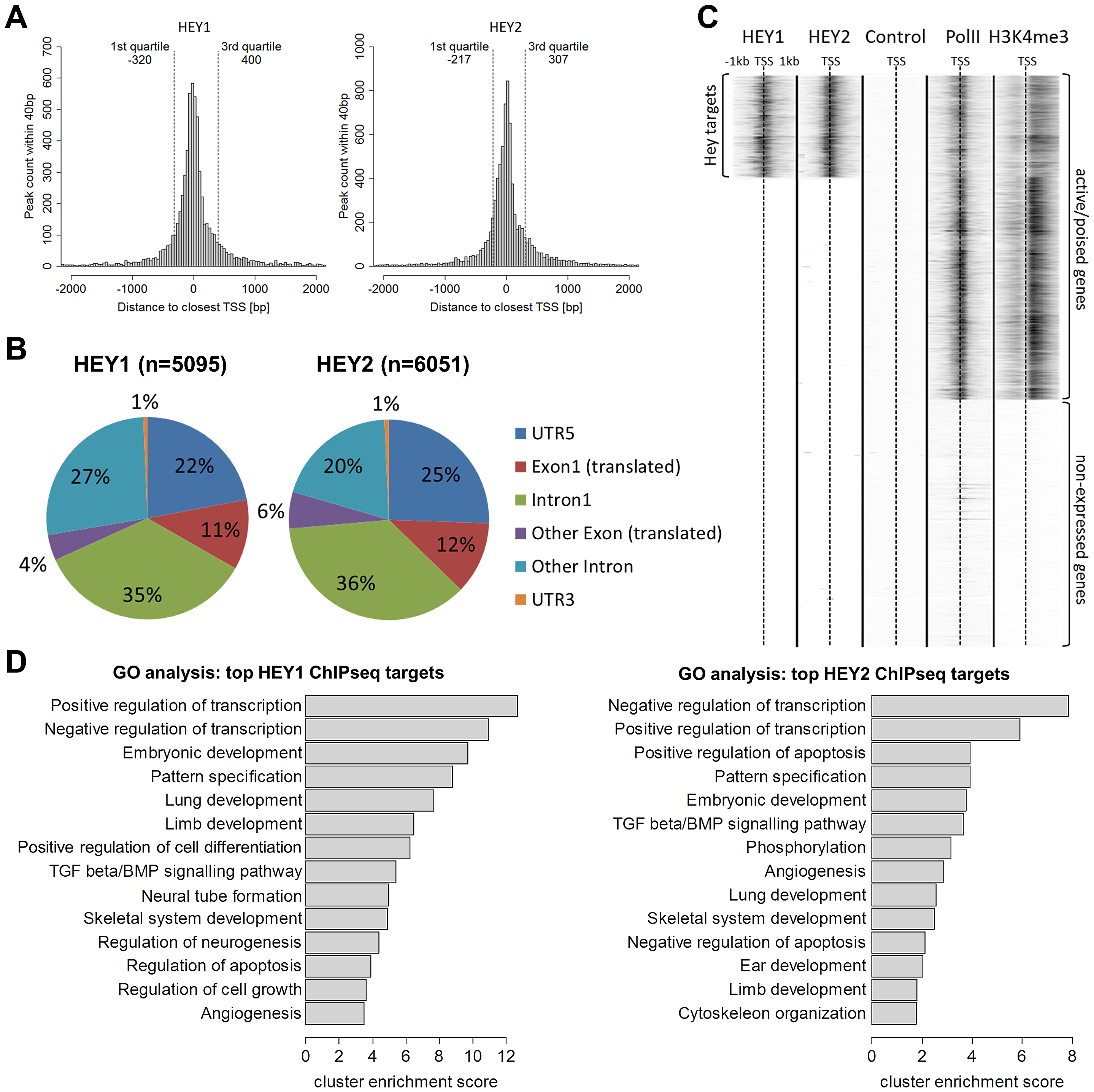 HEY peaks are clustered at transcription start sites of active promoters with a preference for developmental and transcriptional regulatory genes.