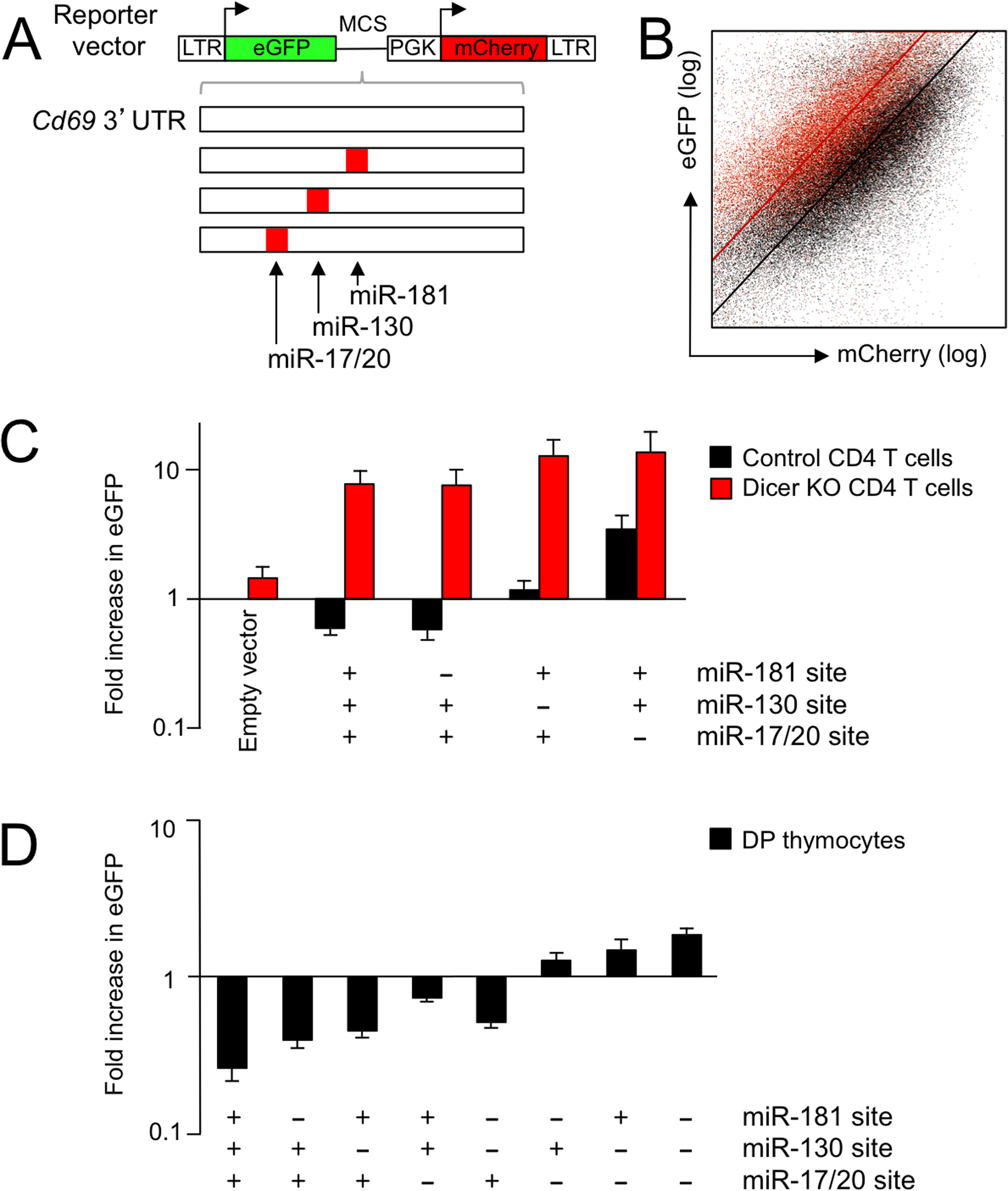 A dual fluorescence reporter system identifies endogenous microRNAs that target the <i>Cd69</i> 3'UTR in DP thymocytes.