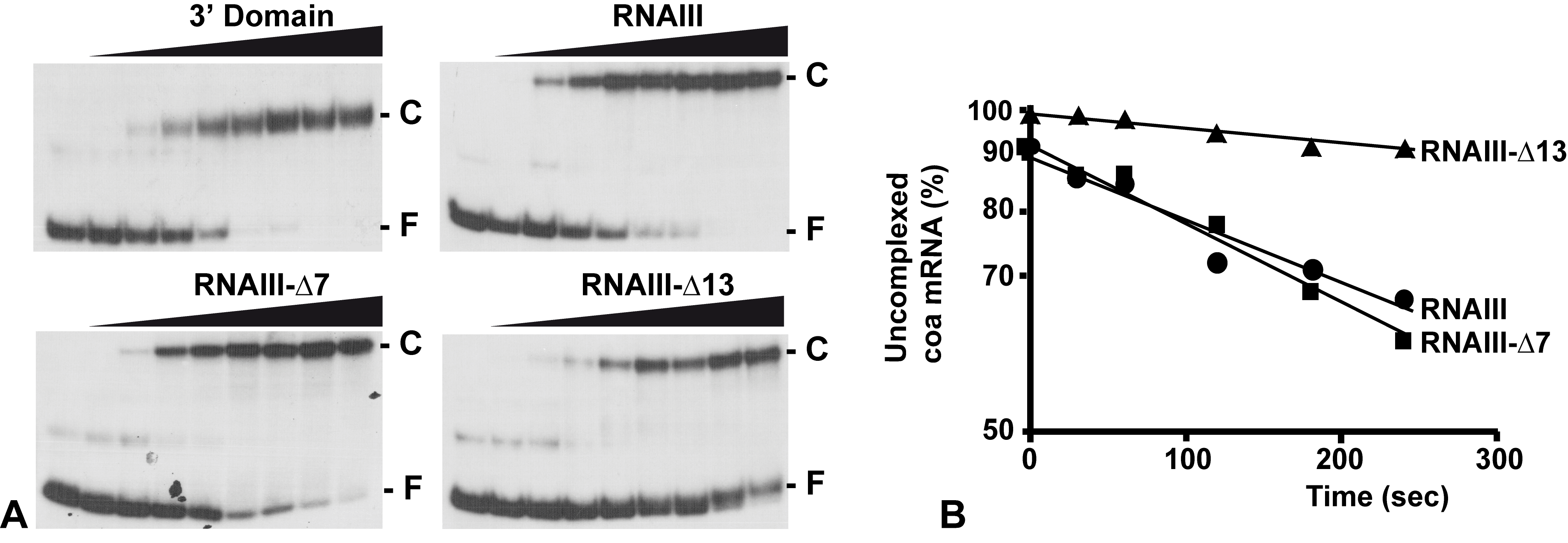 RNAIII binds efficiently to <i>coa</i> mRNA <i>in vitro</i>.