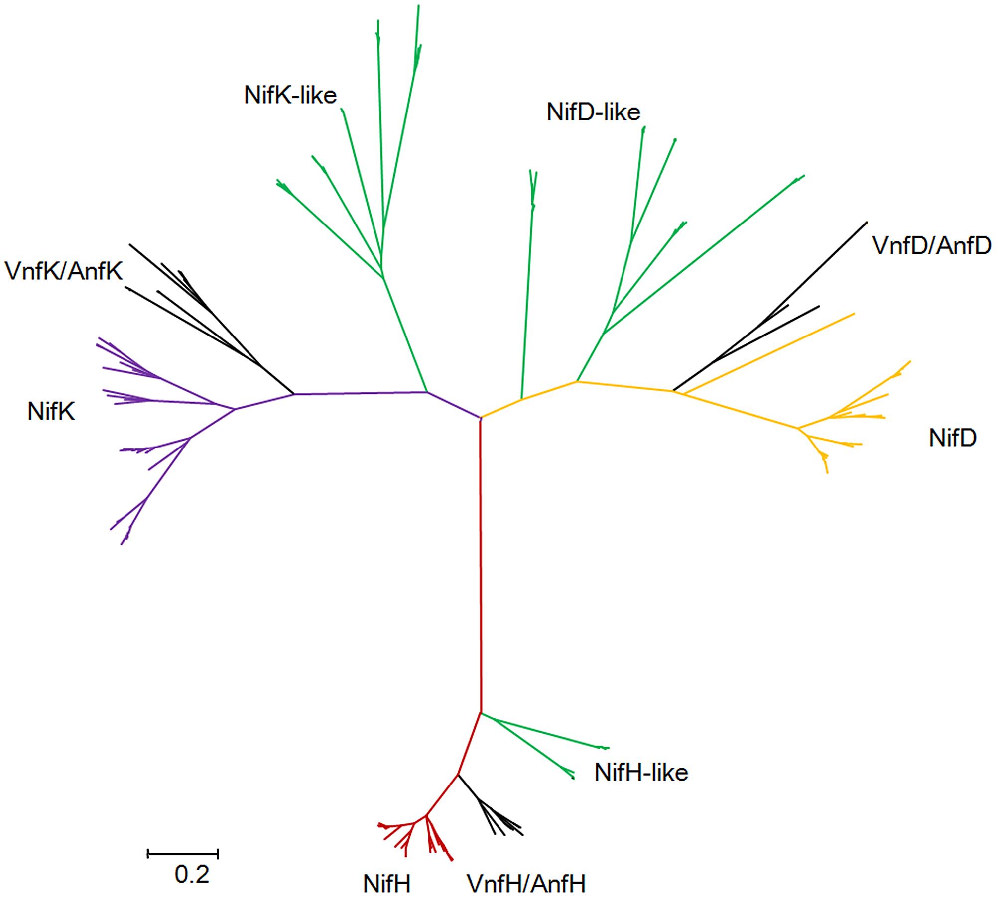 Maximum-likelihood phylogenetic tree of Mo-, Fe- and V-nitrogenases and nitrogenase-like sequences.