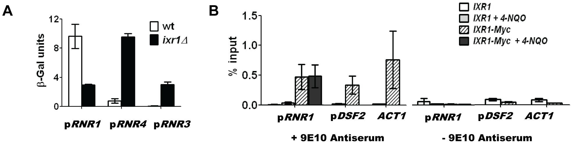 Ixr1 regulates <i>RNR1</i> promoter activity.
