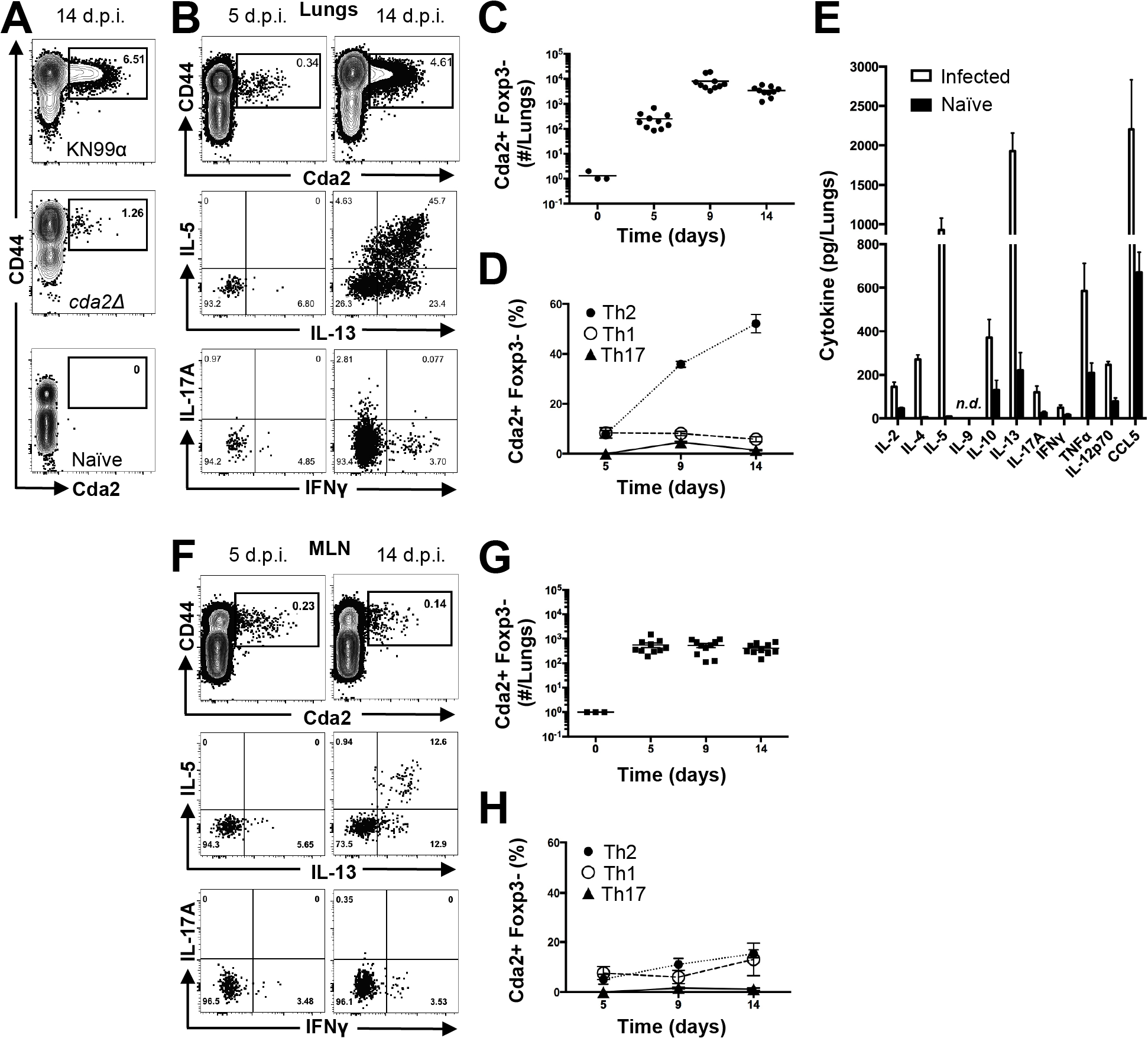 Type-2 Helper T Cells Accumulate in the Lungs of Mice Infected with <i>C. neoformans</i>.
