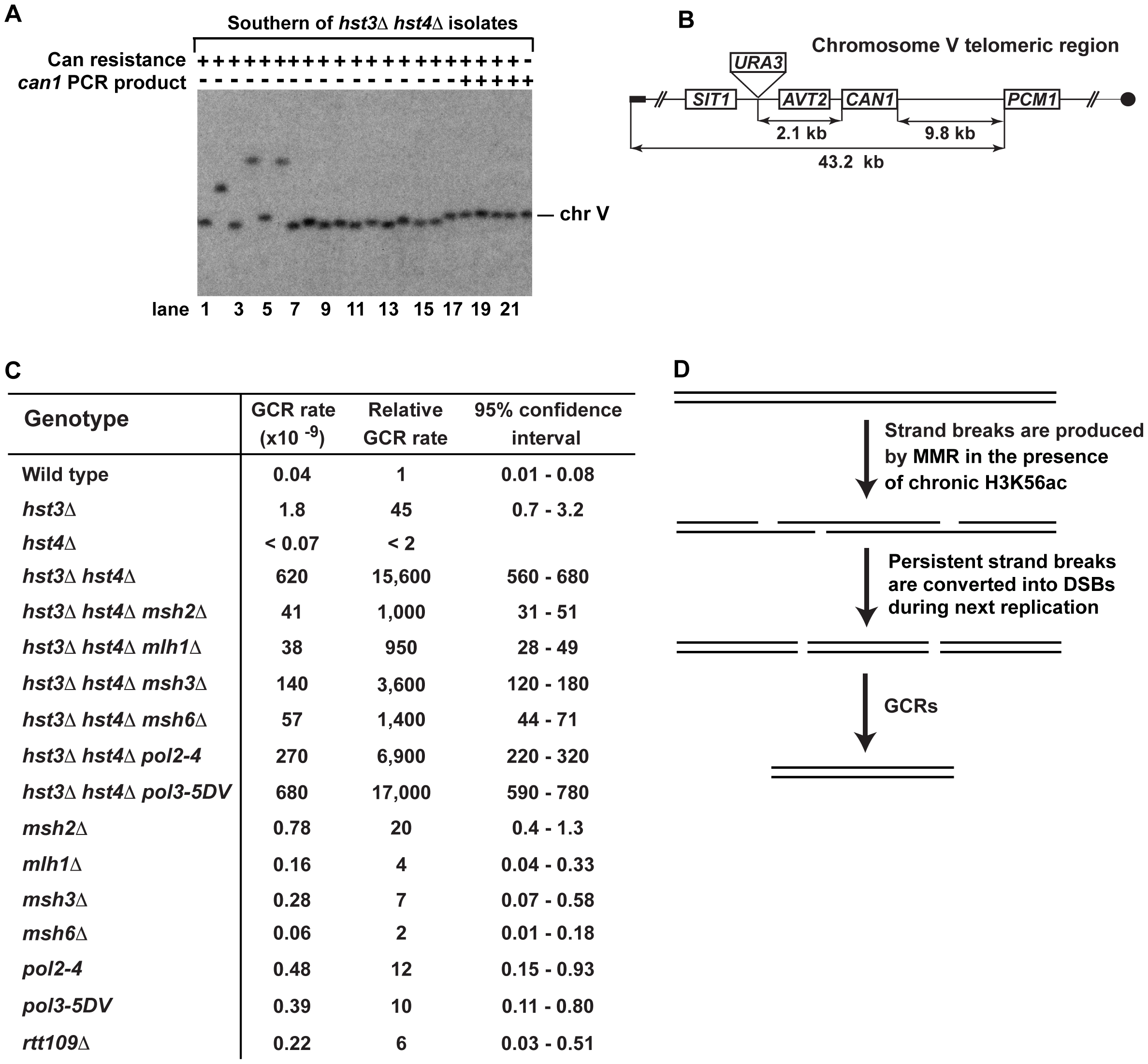 Analysis of GCRs in strains deficient in H3 K56 deacetylation.