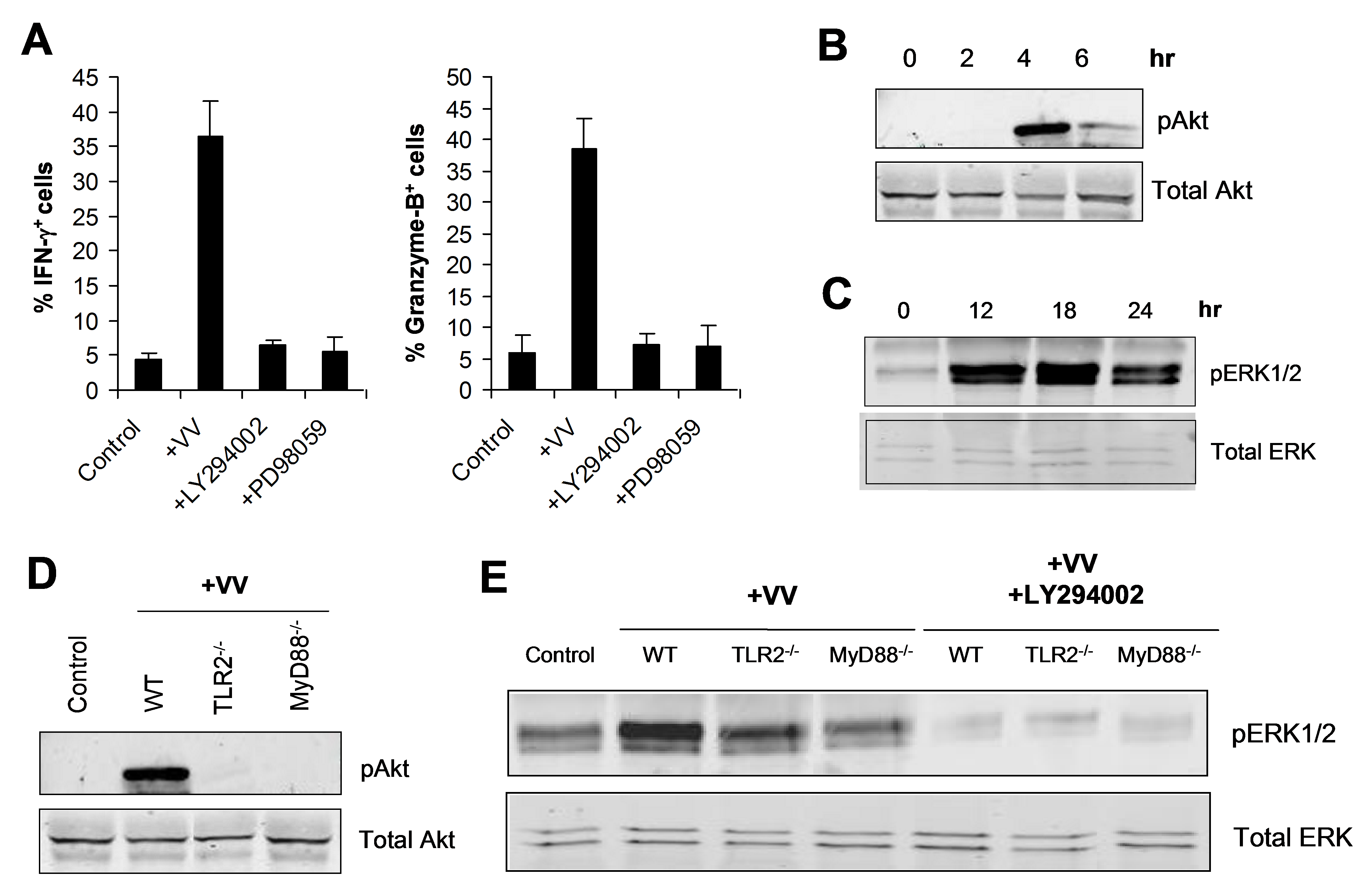 TLR2-dependent activation of NK cells by VV is mediated by PI3K and ERK.