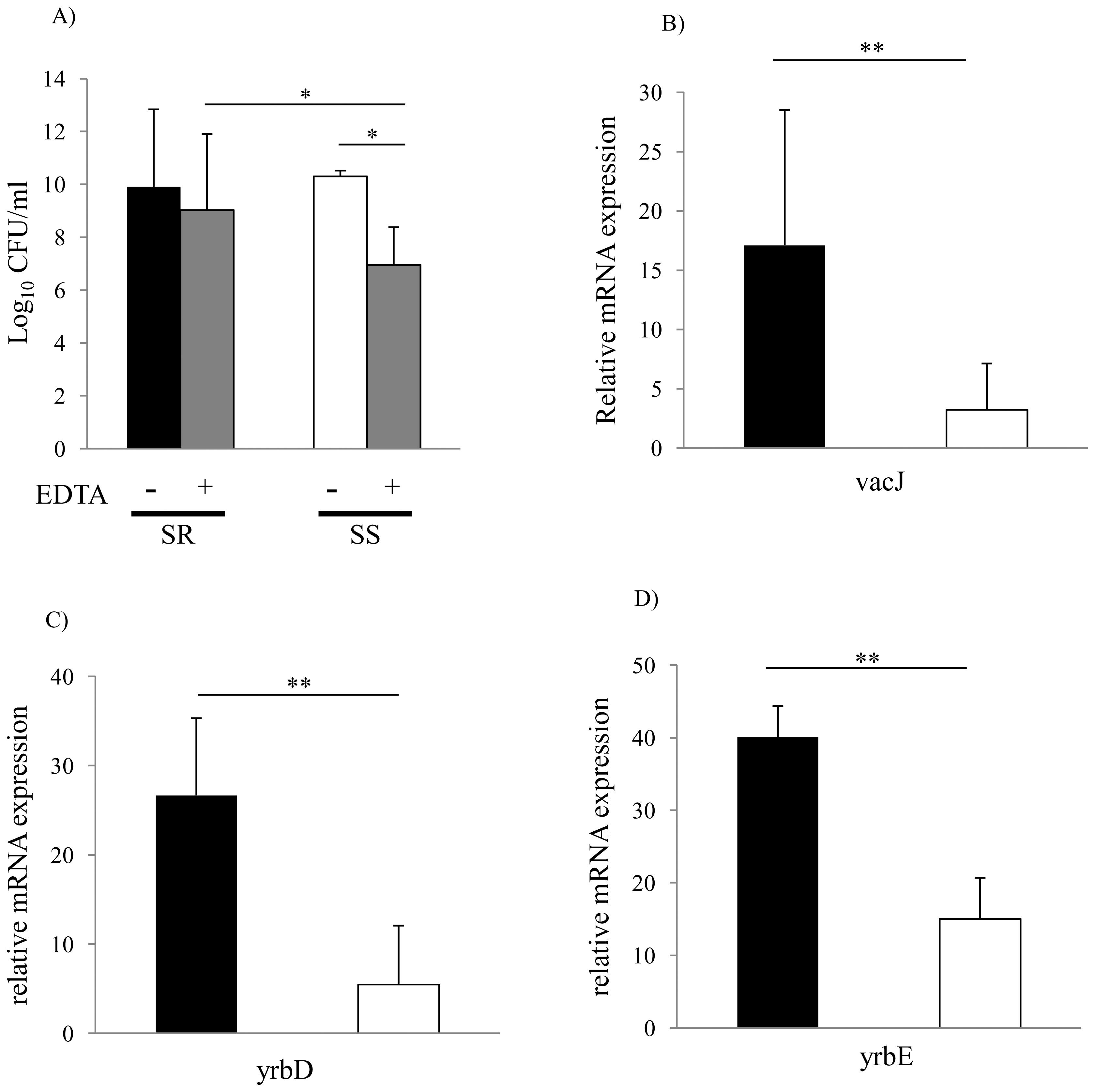 Membrane stability and <i>vacJ</i> and <i>yrb</i> expression among clinical isolates.