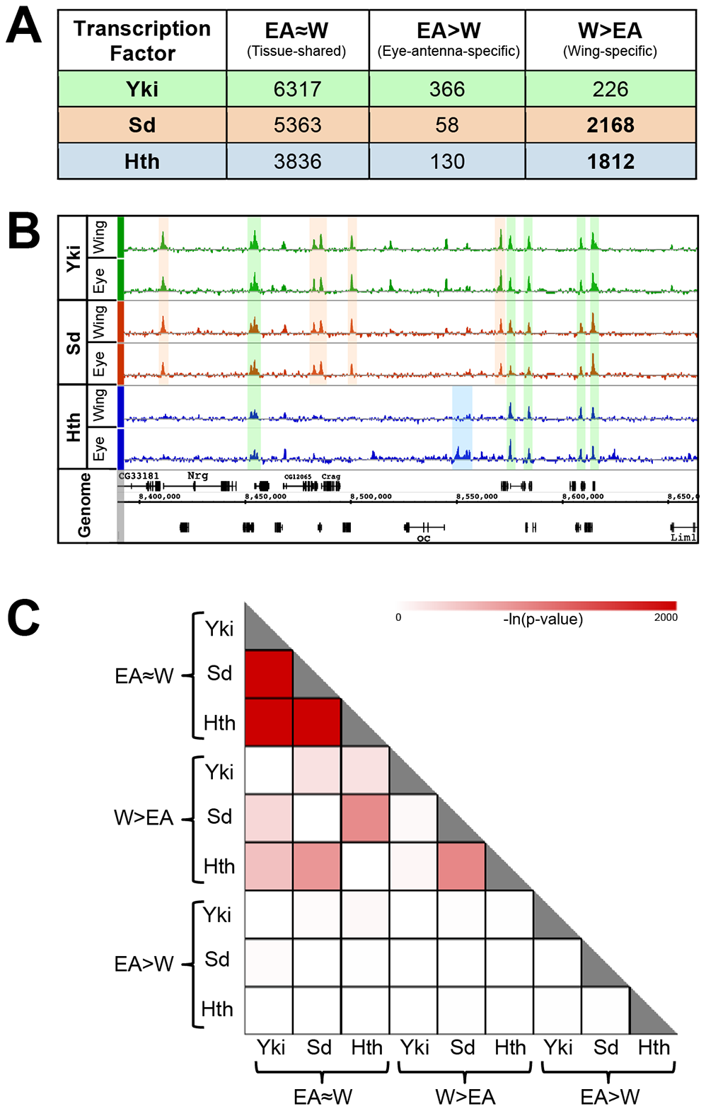 Overview of genome-wide Yki, Sd, and Hth binding patterns.