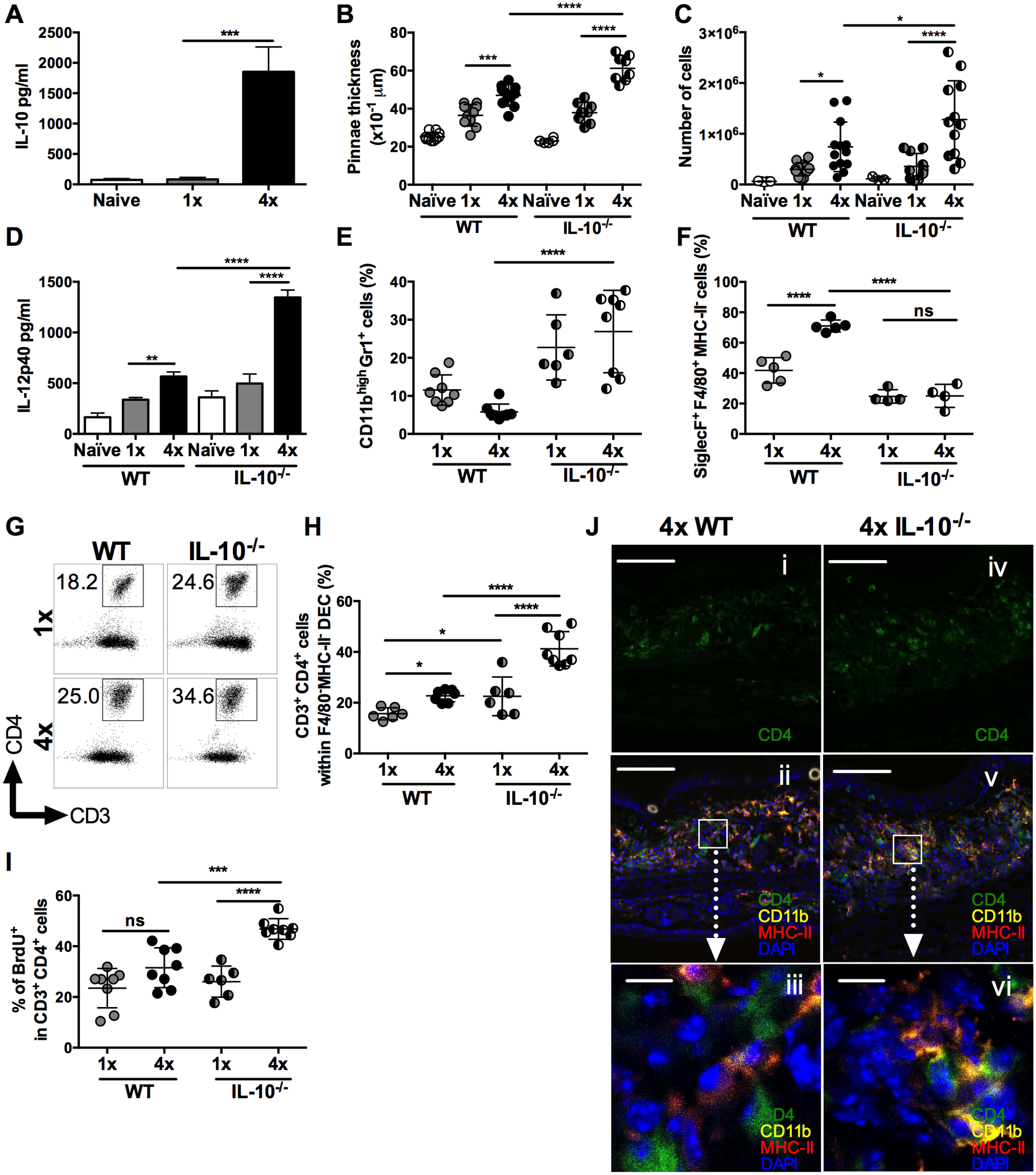IL-10 produced in the skin following repeated exposures to <i>S</i>. <i>mansoni</i> cercariae limits CD4<sup>+</sup> T cell proliferation and mediates recruitment of granulocytes.