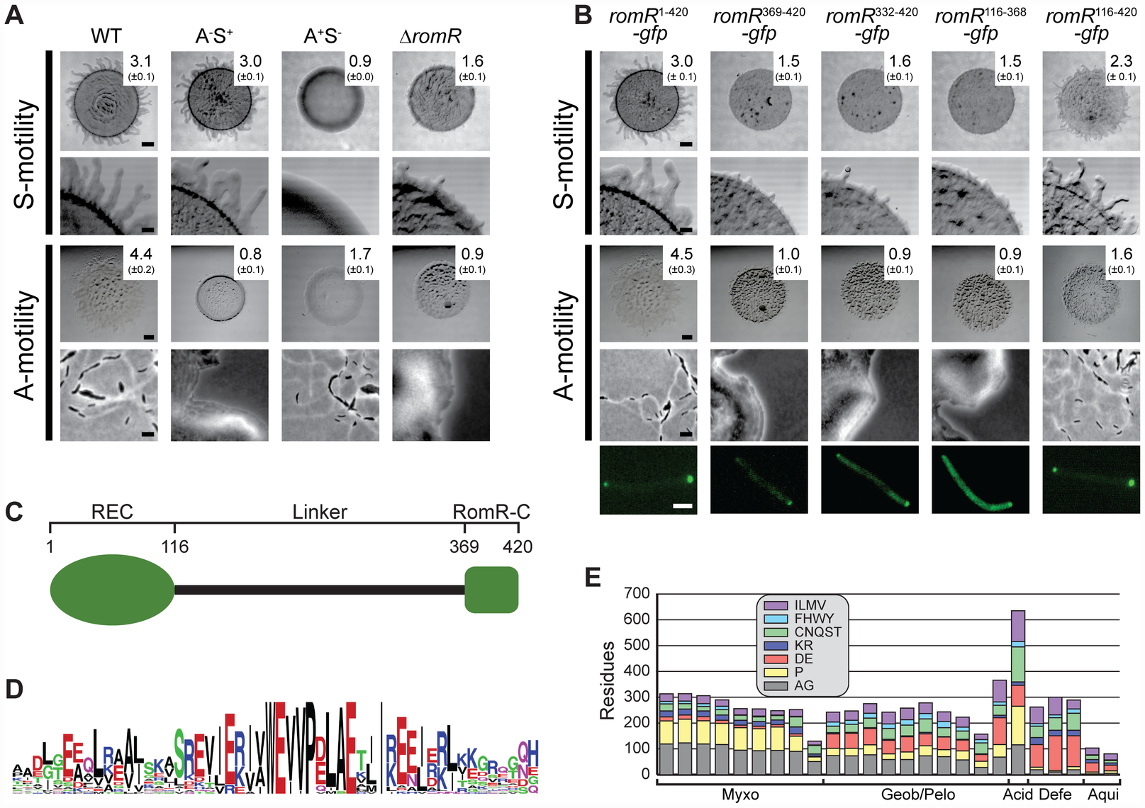 RomR is important for S- as well as for A-motility and contains two pole-targeting determinants.