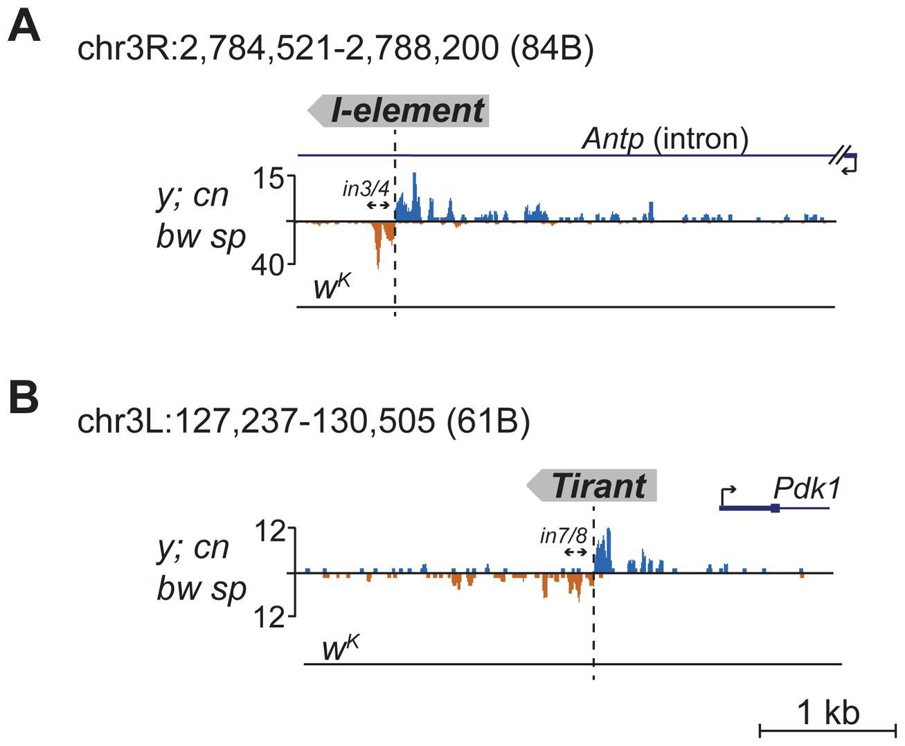 Detection of newly transposed TEs in the <i>y; cn bw sp</i> genome based on the piRNA profile.