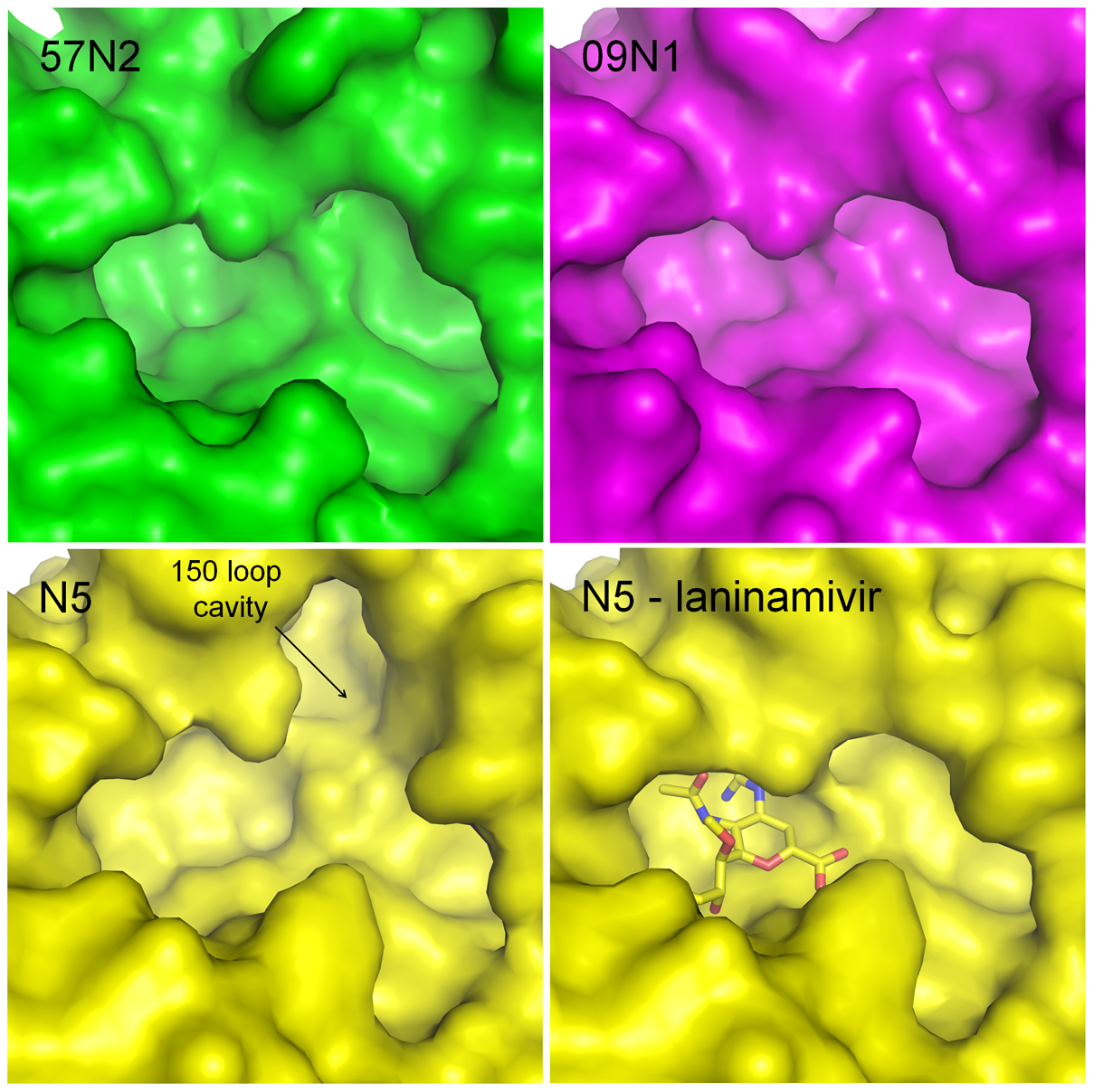 Comparison of the active sites of p57N2, p09N1 and N5.
