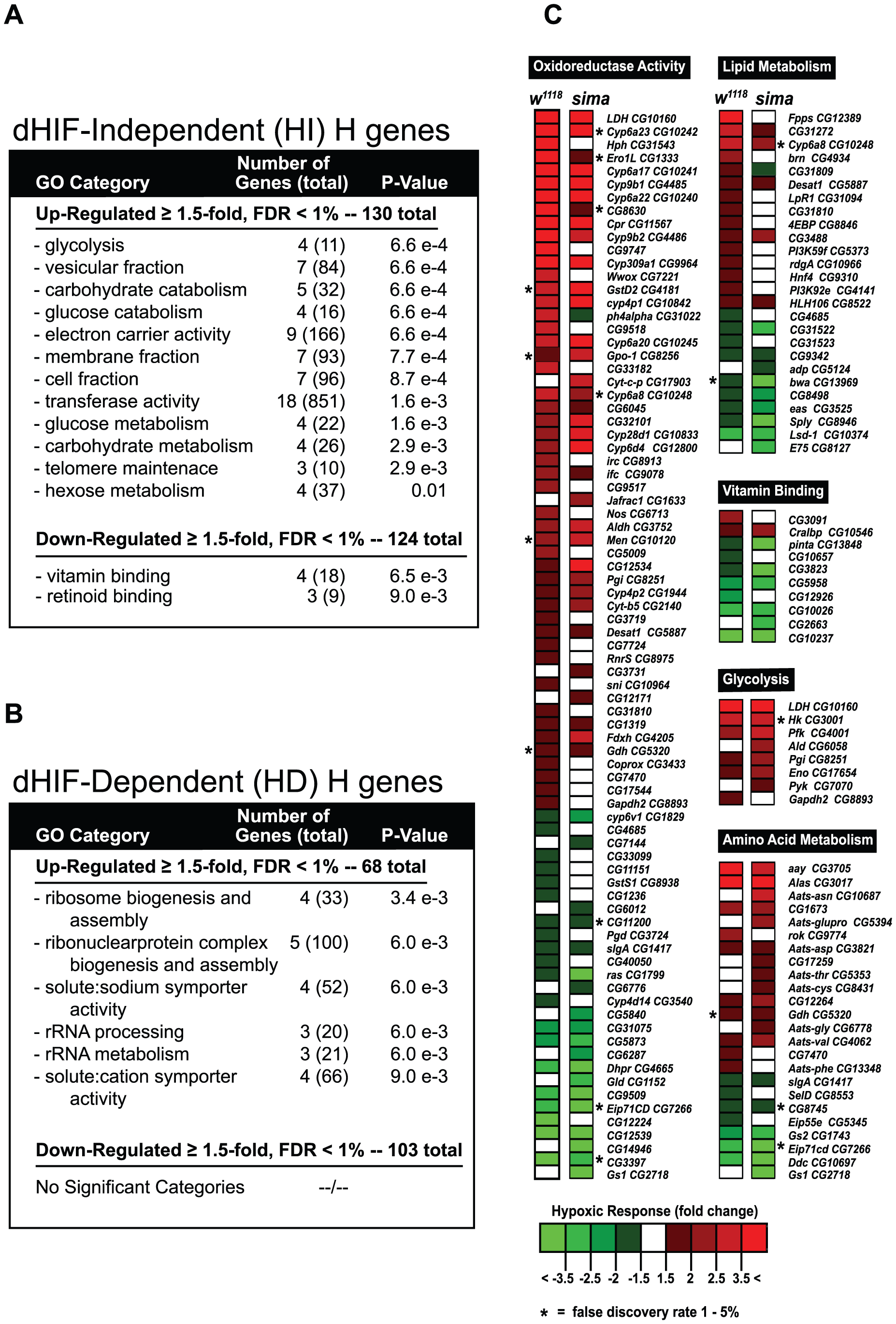 HIF-dependent and HIF-independent hypoxic response genes.