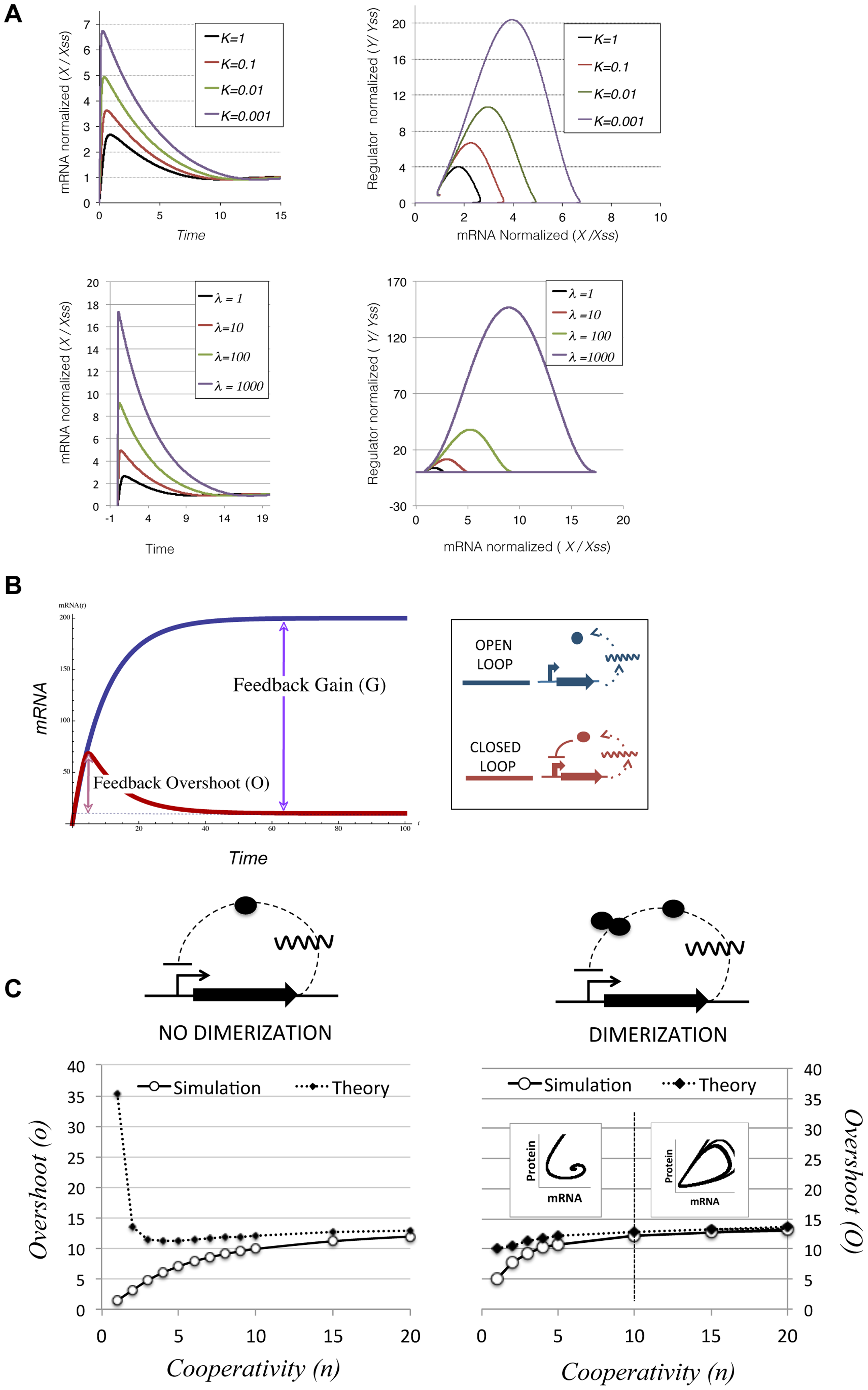Transcriptional overshooting and its relationship with feedback gain.