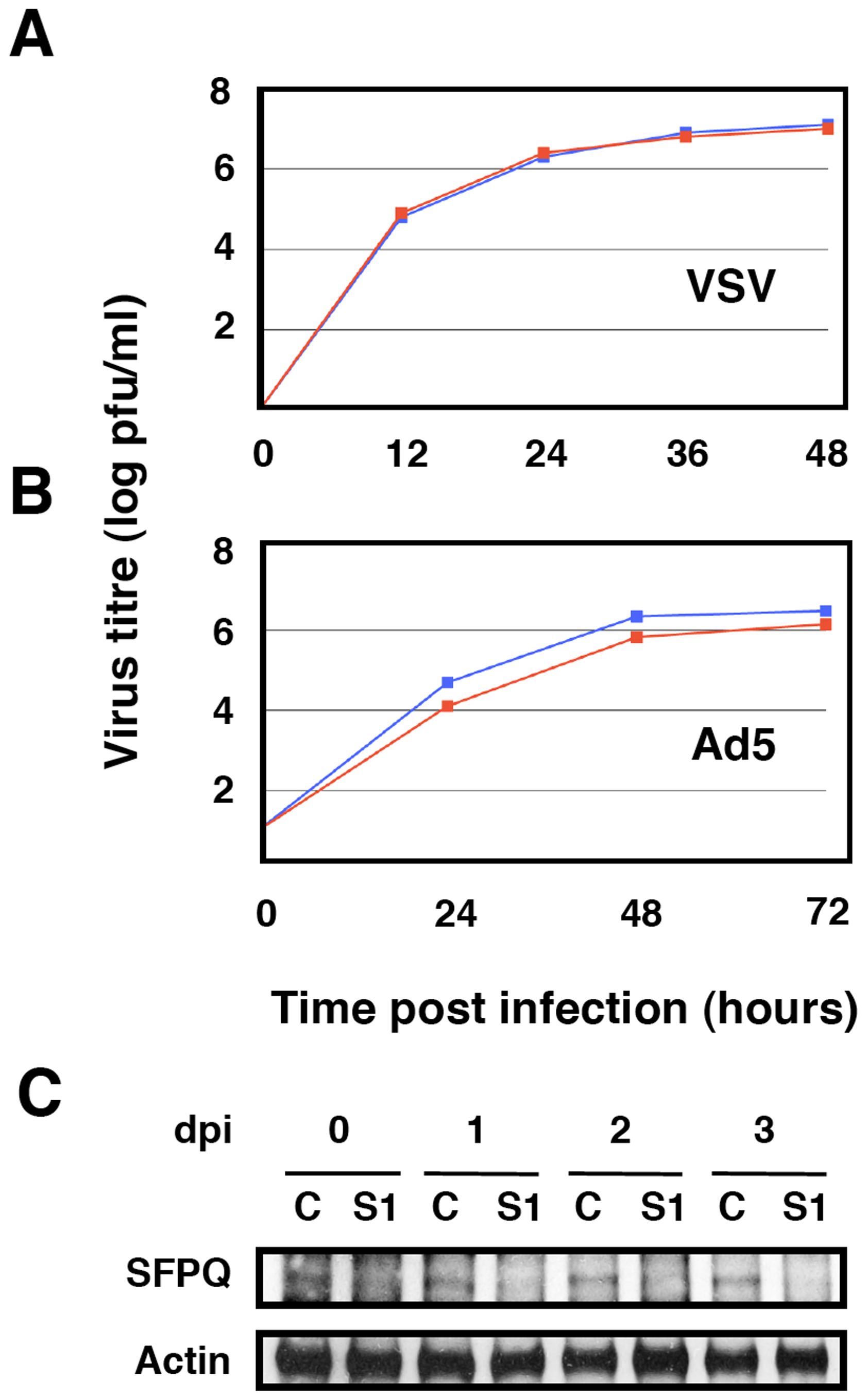 Kinetics of VSV and Ad5 multiplication in SFPQ/PSF-silenced cells.