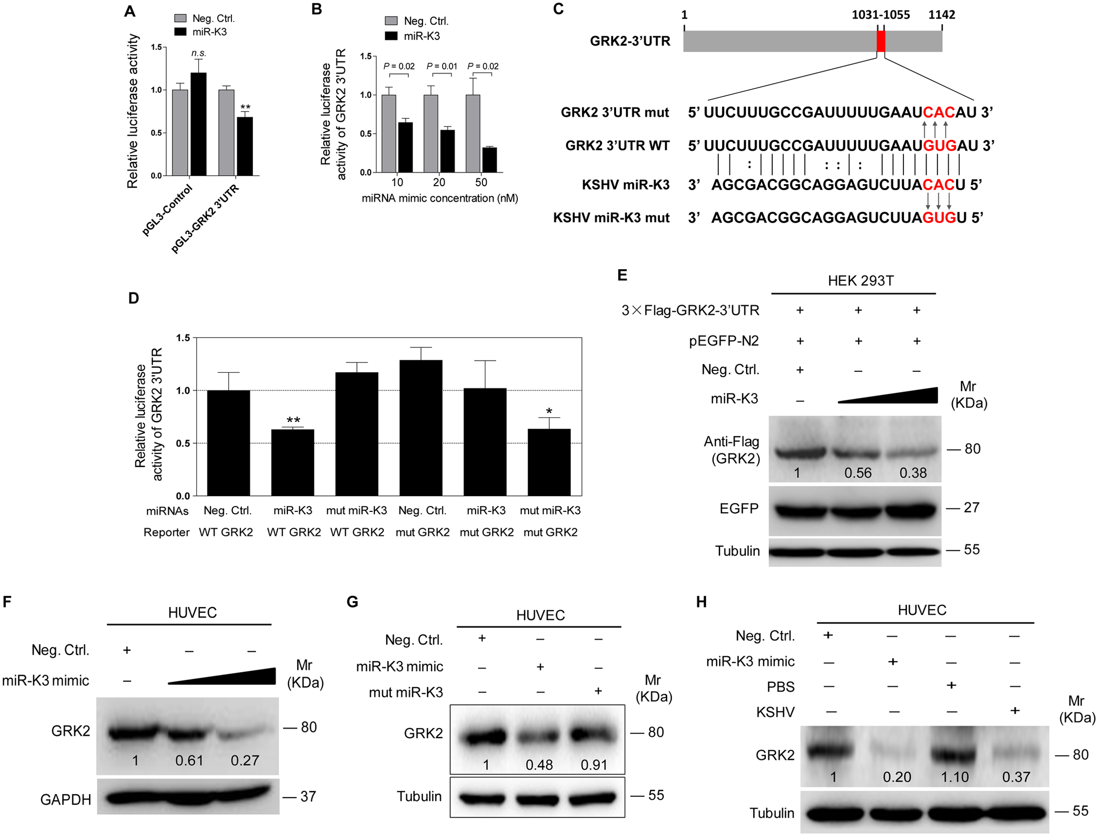 GRK2 is directly targeted by miR-K3.